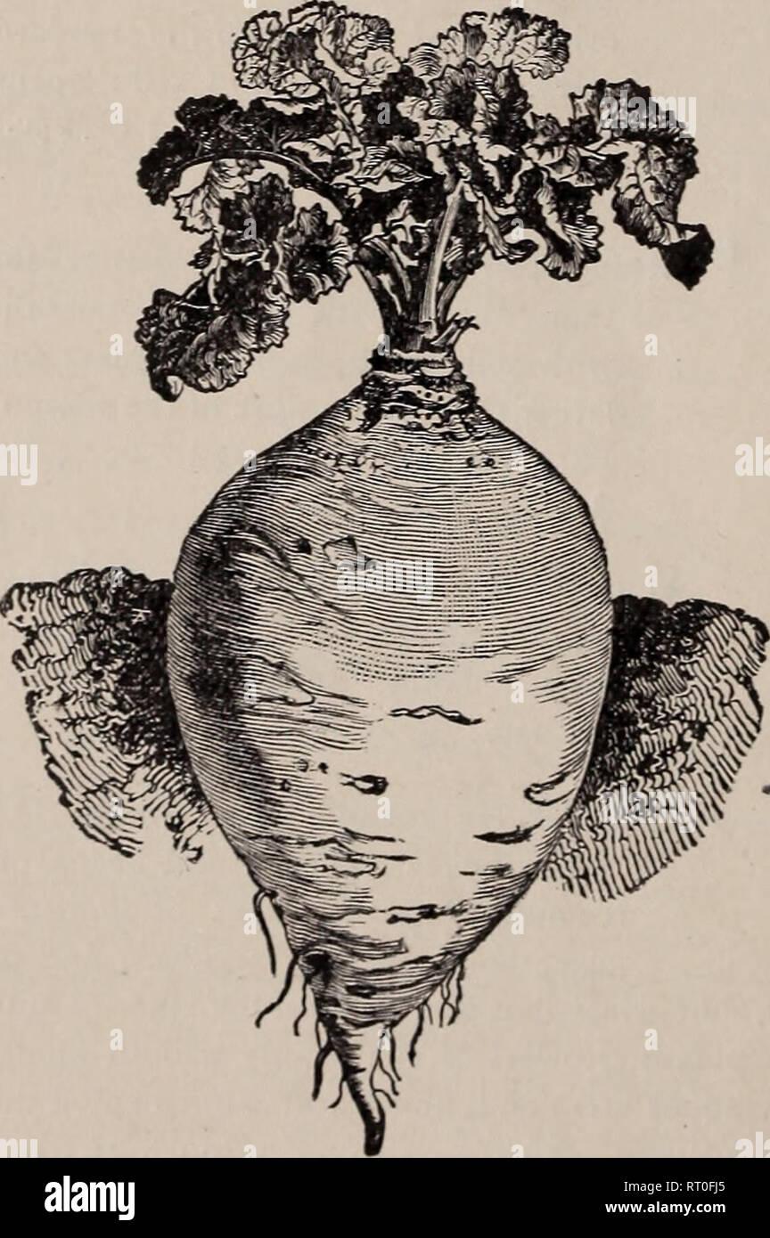 eb1baf3eea6d Young &Amp; Halstead descriptivo del catálogo de semillas. Viveros ...