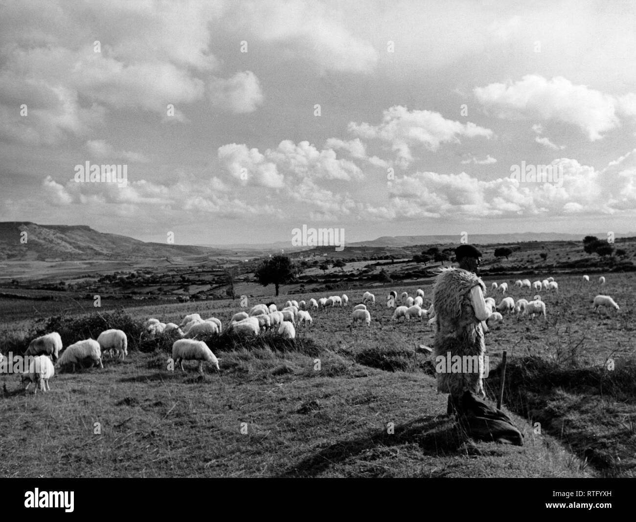 El campo de Cerdeña de Oristano, 1952 Foto de stock