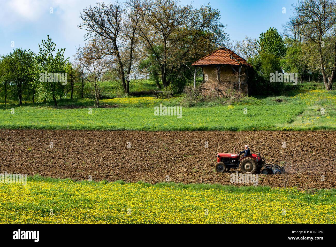 Antigua casa y se derrumbó en la pradera, junto a la tierra cultivable, Serbia Central cerca Osanica, Sige y Krepoljin Foto de stock