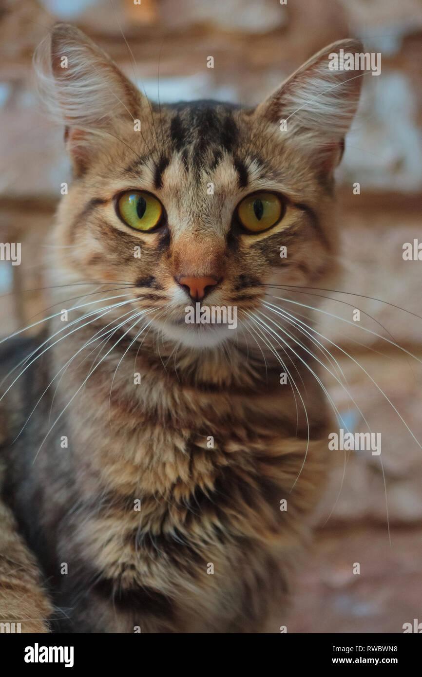 e2c5226c85 Lonely cat sentado en la cornisa y mirando al lente de la cámara. Hermoso  gato