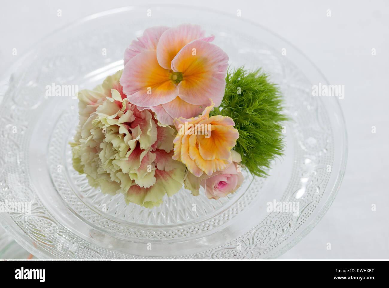 La botánica, polyanthrus florece en nostálgicos gl, ¡Precaución! Para Greetingcard-Use / Postcard-Use en países de habla alemana se pueden aplicar ciertas restricciones Imagen De Stock