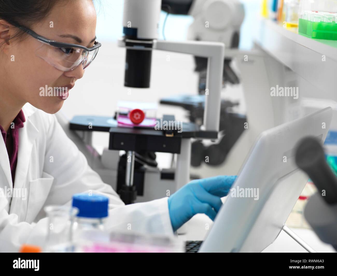 Visualización de los resultados científicos en el equipo durante el experimento en el laboratorio Foto de stock