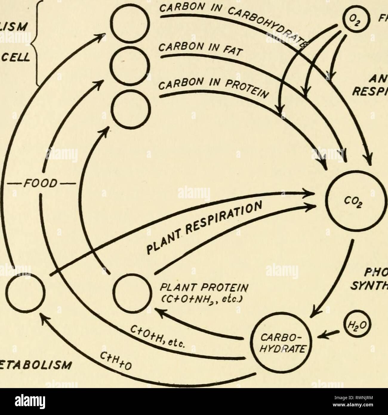 Elementos De Biología Con Elementos Especiales De La