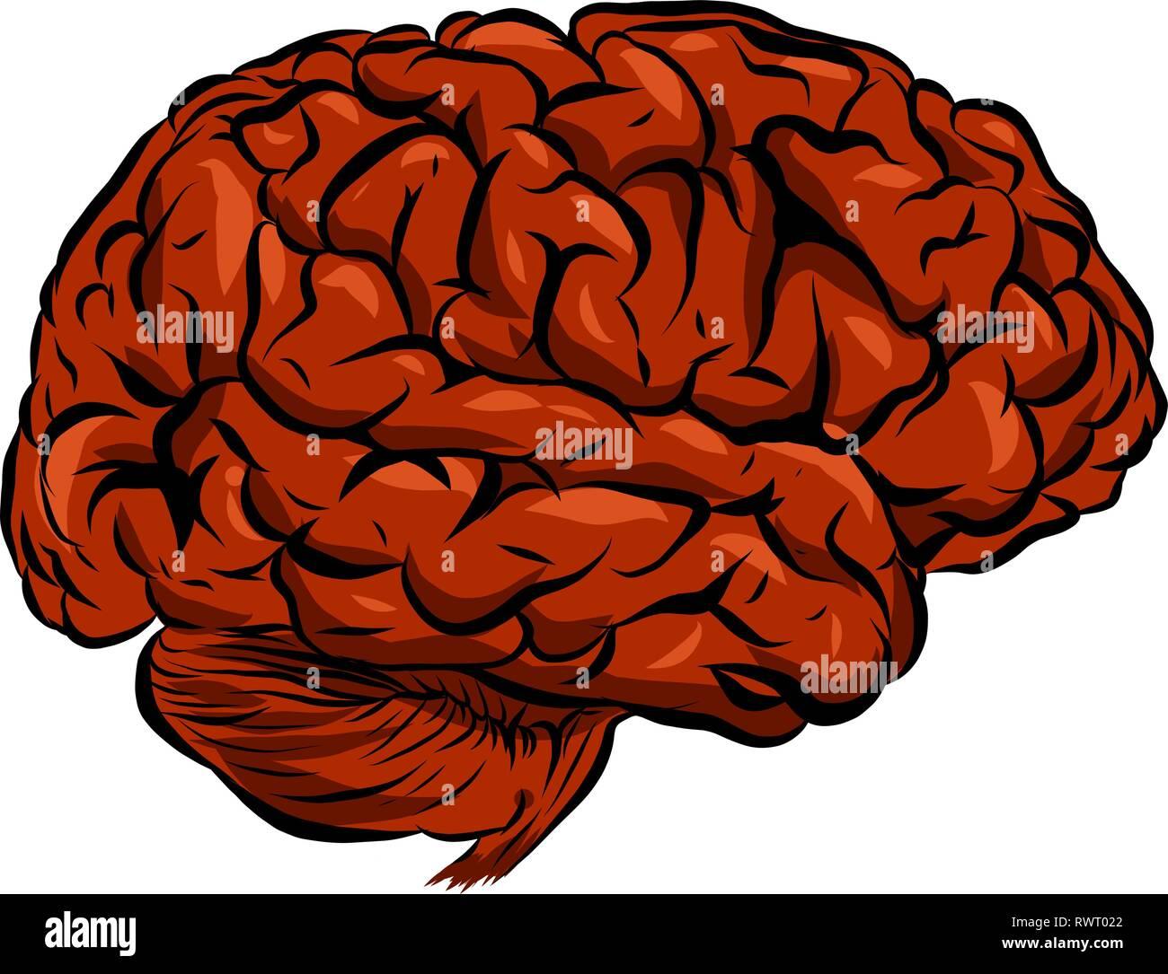 Ilustración de un cerebro humano con fondo blanco. Imagen De Stock