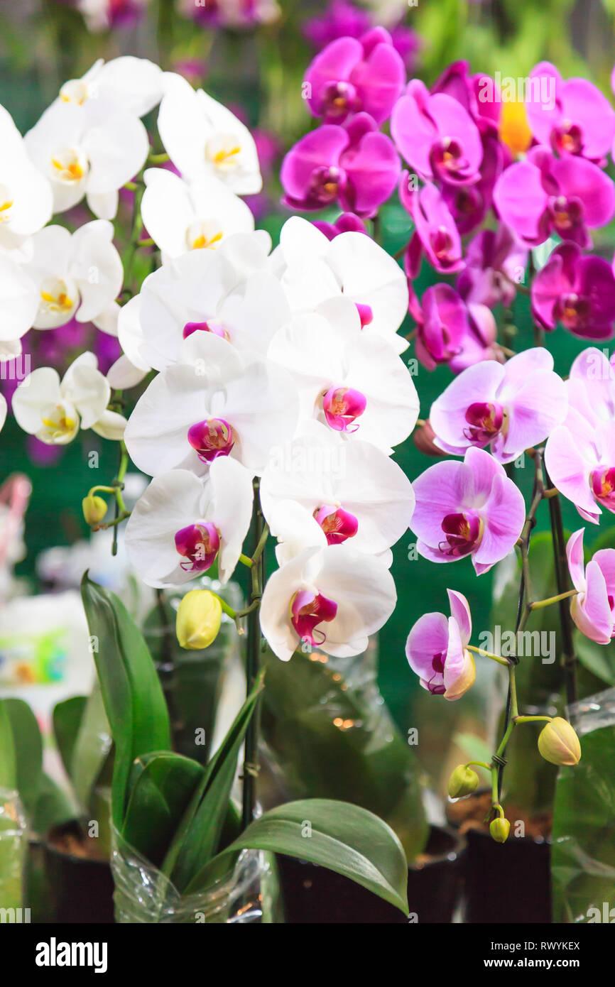 Fresca Surtida De Orquídeas Coloridas Flores De Fondo
