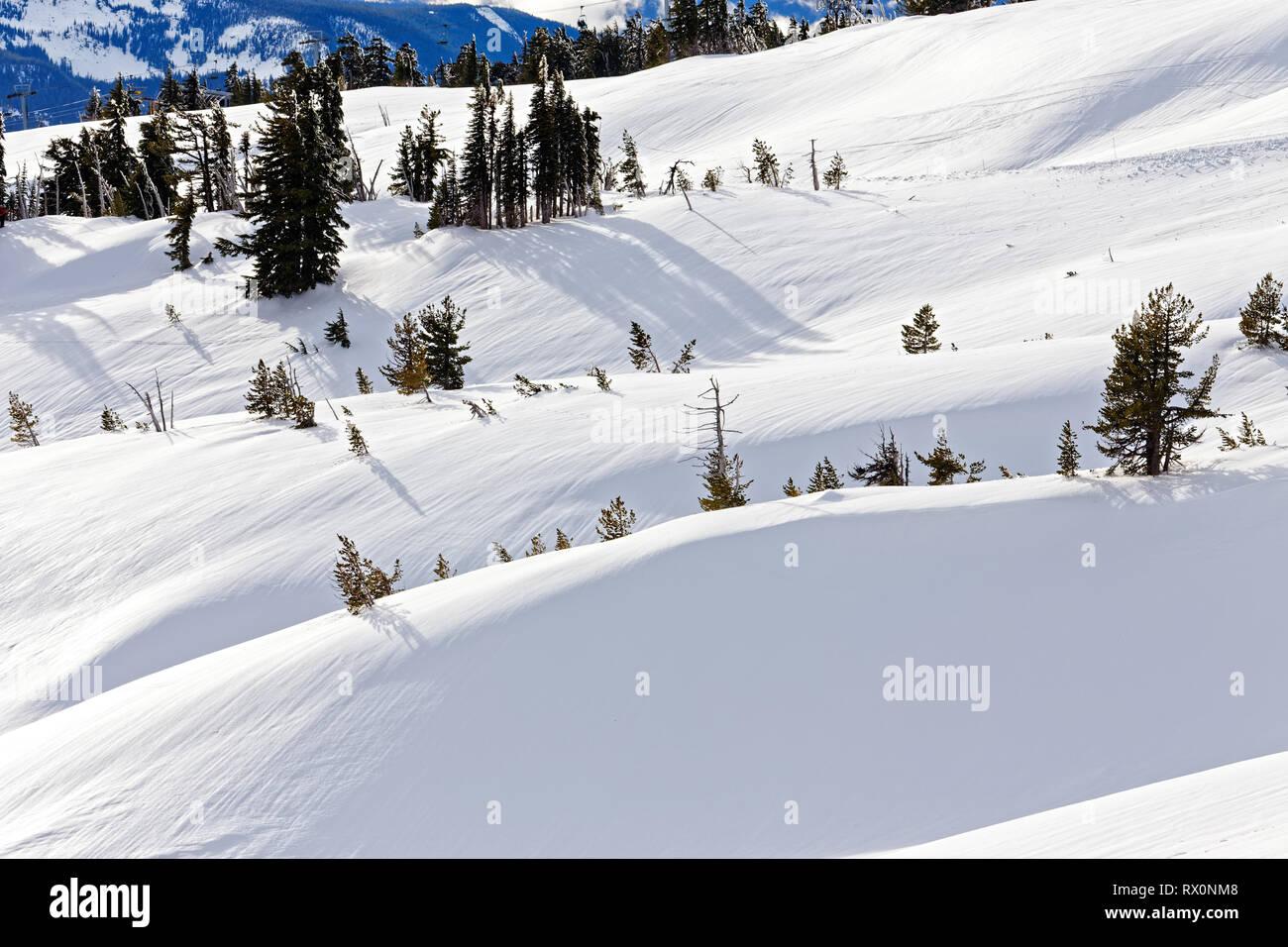 -- 43,489.03996 nevados de montaña invernal paisaje de colinas con hielo en coníferas pinos tree line timberline, nieve fresca con estrías marcas de rizo Foto de stock