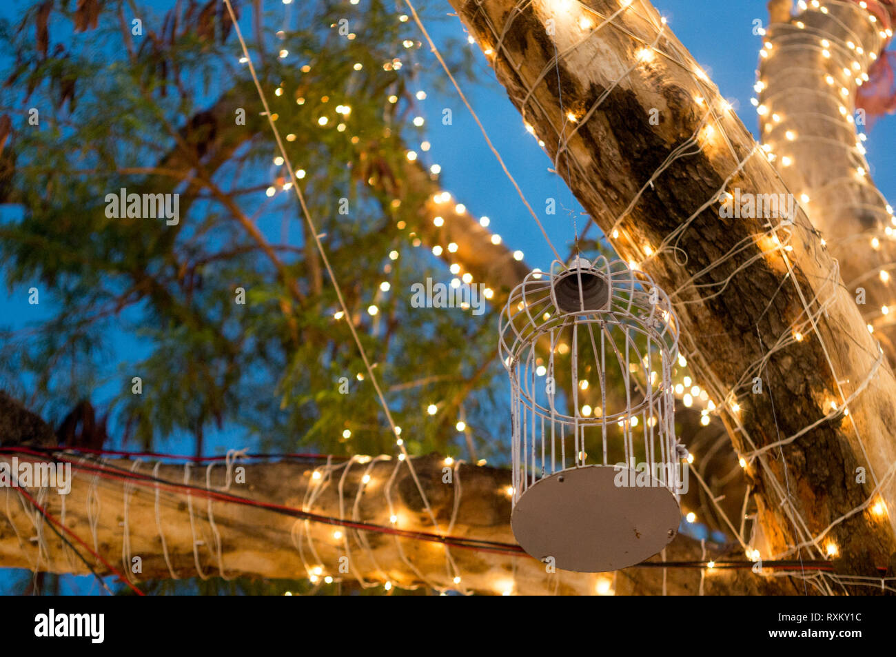 Cadena De árboles Cubiertos De Luces Y Whilte Jaulas Para