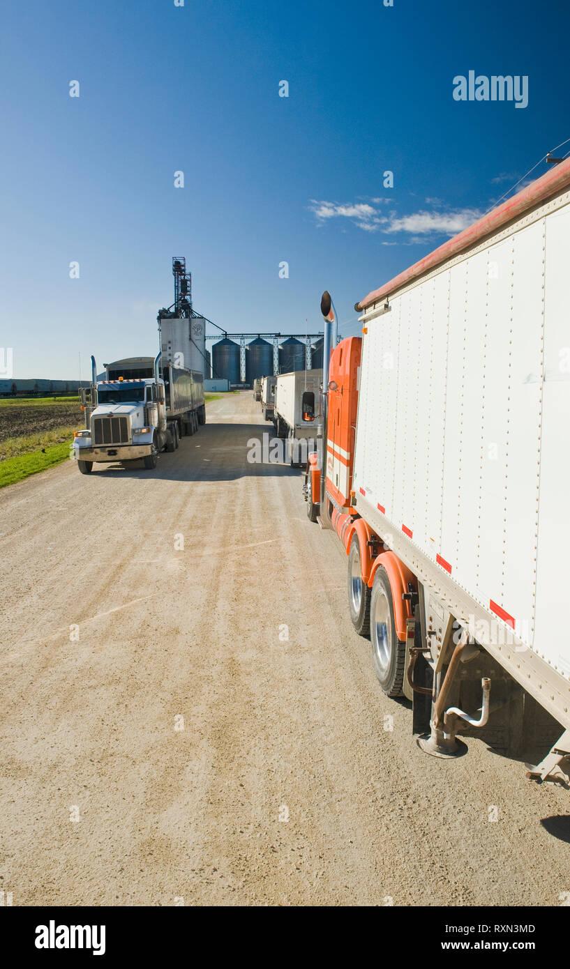 Los camiones de acarreo de soya a un terminal terrestre cerca de Winnipeg, Manitoba, Canadá Foto de stock
