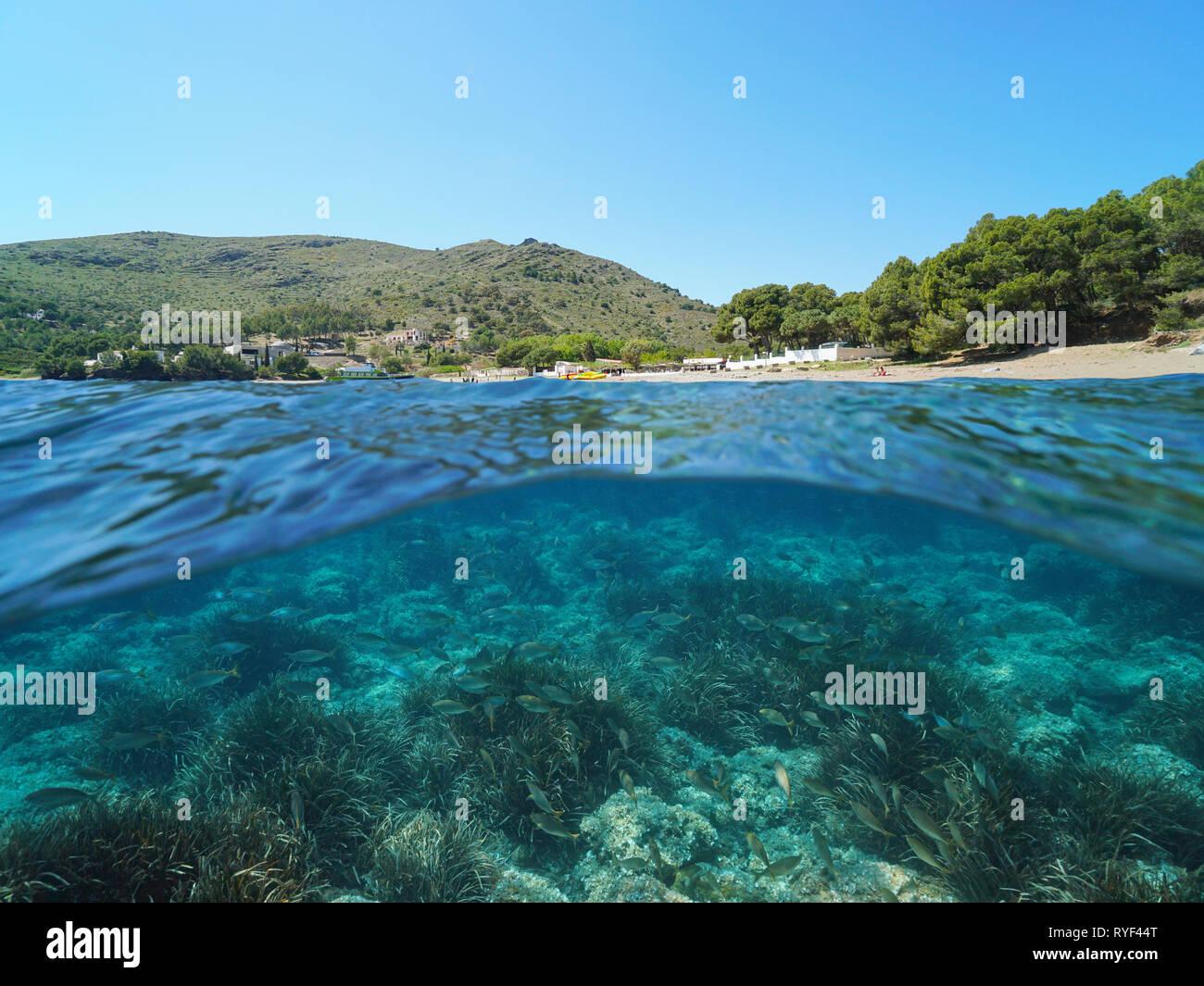 España Costa Brava con peces y algas submarinas, mar mediterráneo, cala Montjoi, Roses, Cataluña, vista dividida por la mitad y bajo el agua. Foto de stock
