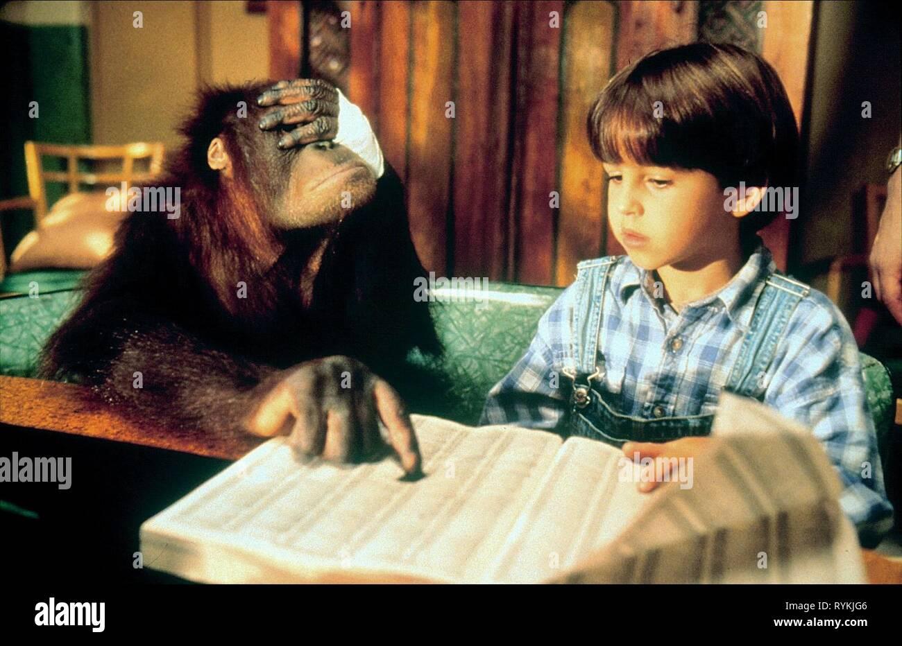 Orangután, DUNSTON LLYOYD,cheques en, 1996 Foto de stock
