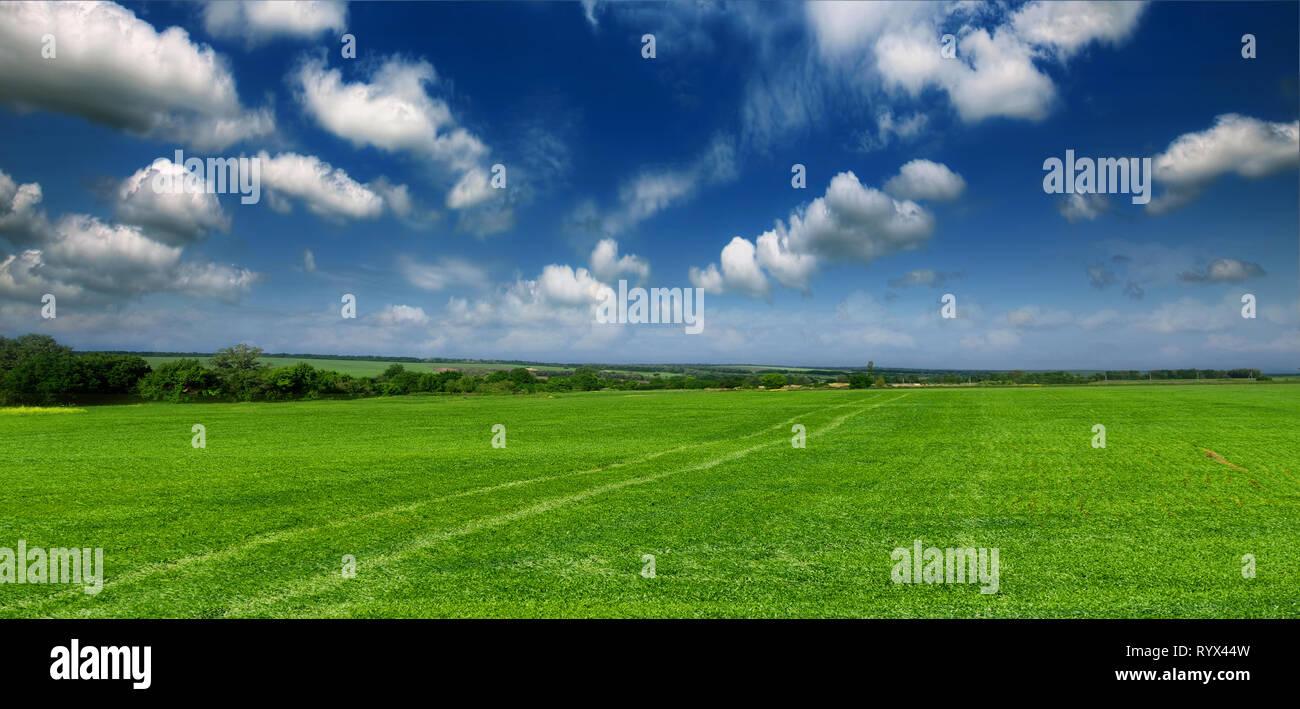 Hermoso y verde campo de trigo joven contra Un nublado cielo azul Imagen De Stock