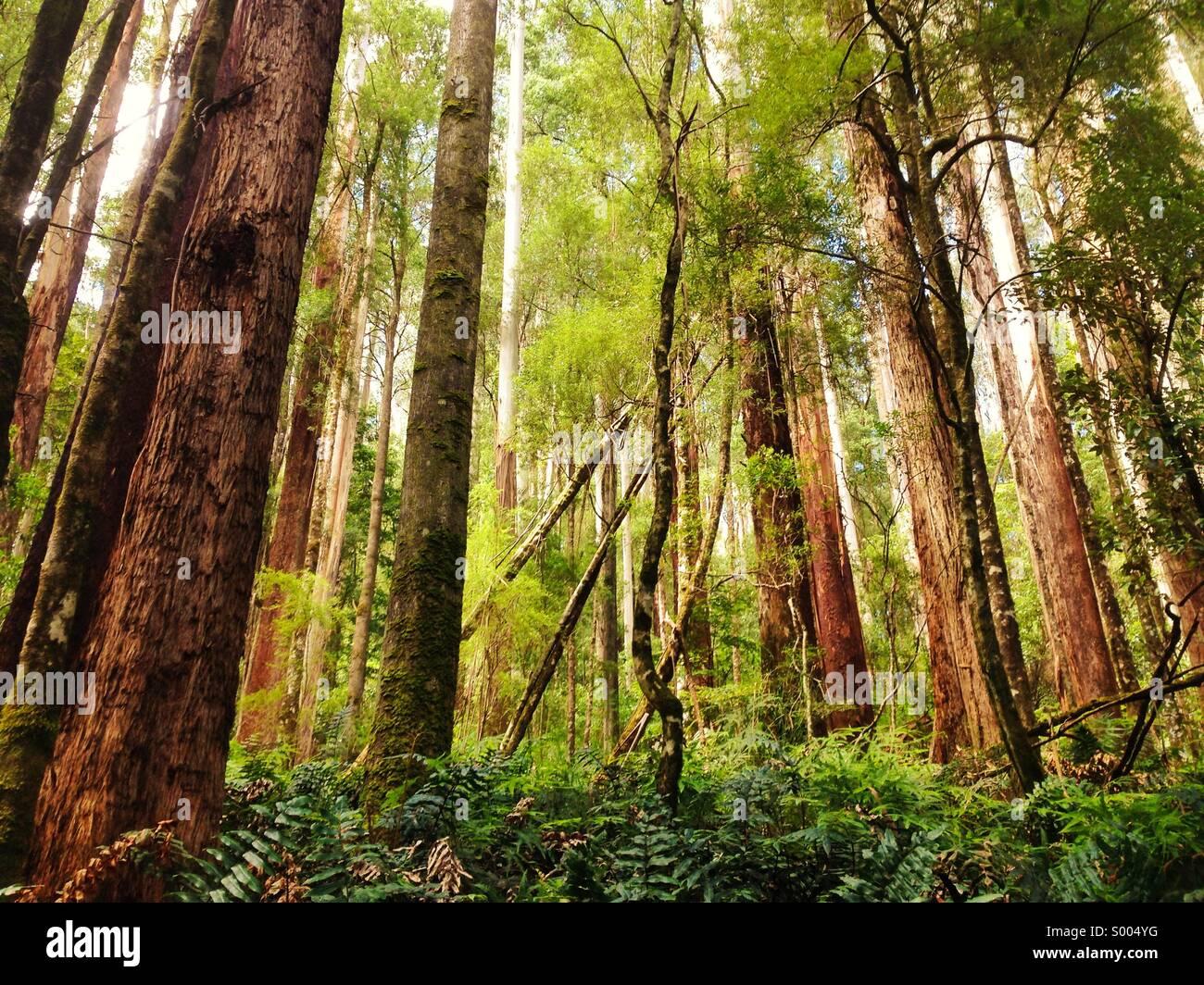 Sueño del bosque Imagen De Stock