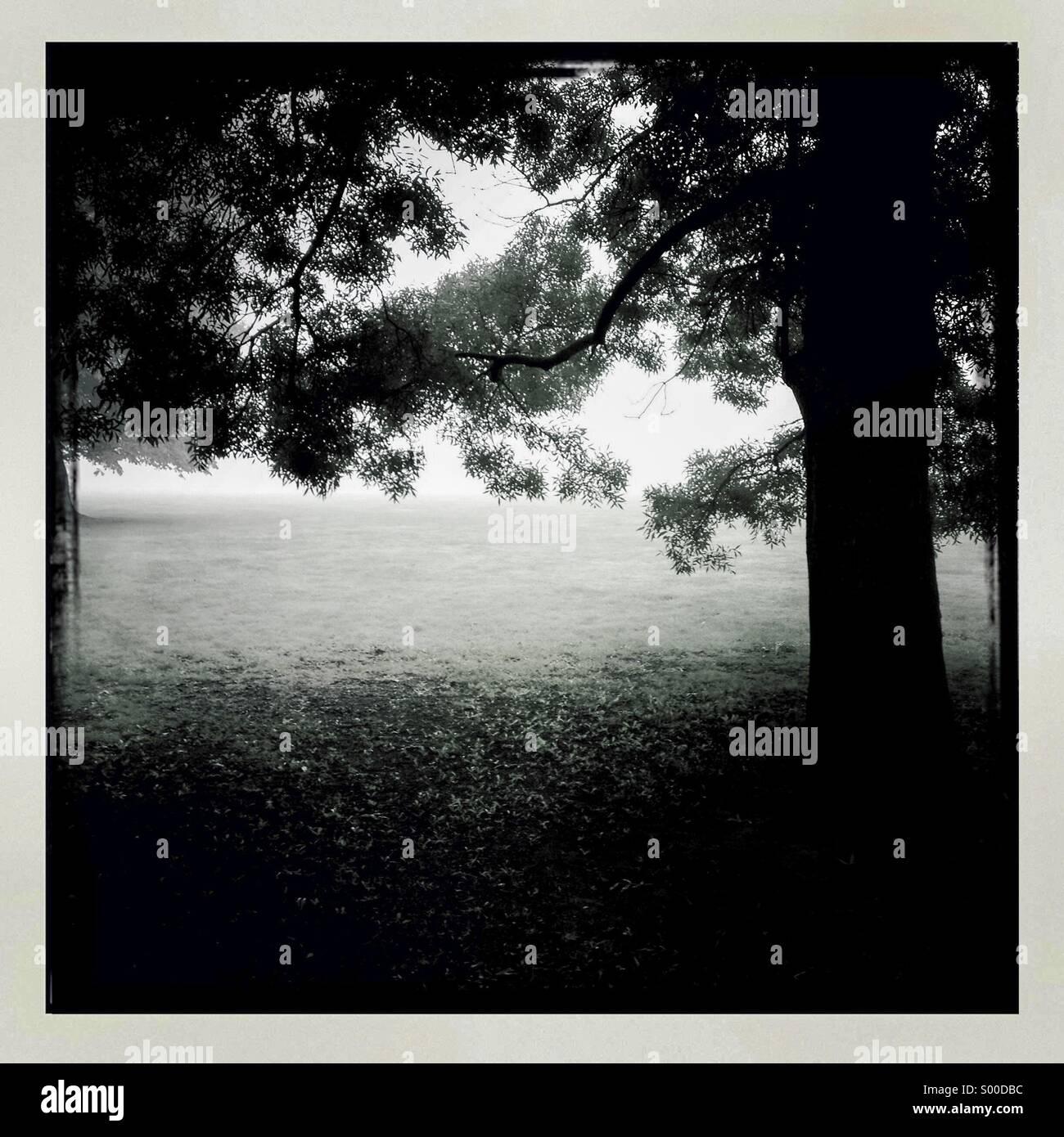 Fotografía en blanco y negro del viejo roble en campo. Formato cuadrado. Bordes blancos. Londres, Gran Bretaña. Foto de stock