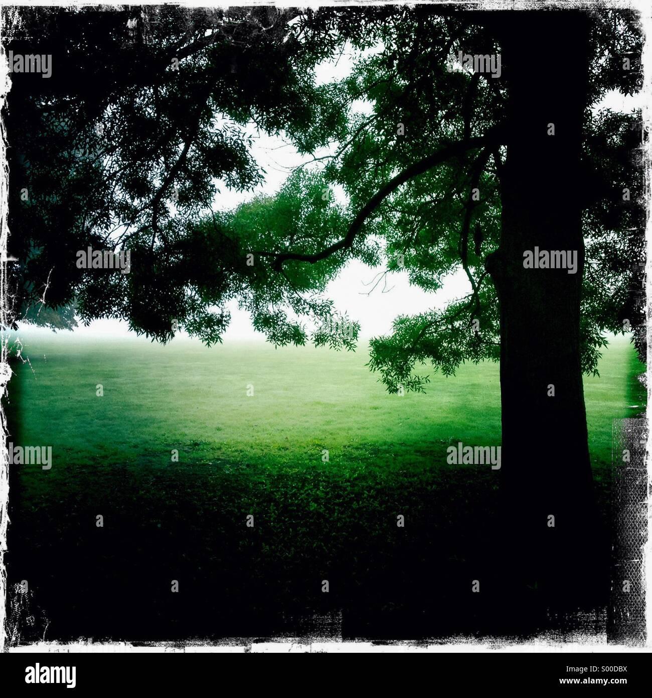 Fotografía en color de alto contraste de la vieja encina en un parque. Formato cuadrado. Londres, Gran Bretaña. Foto de stock