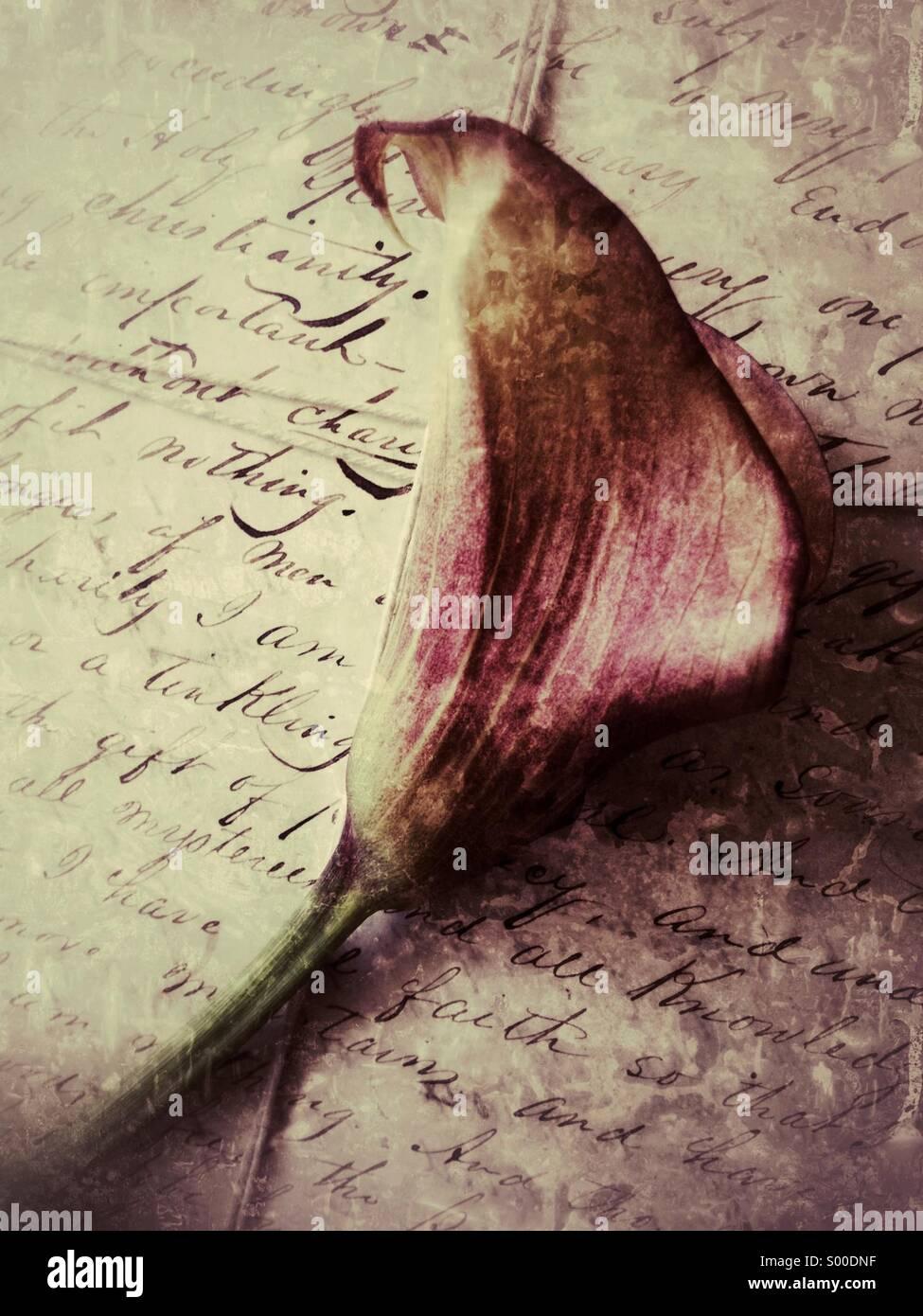 Calla Lily en viejas cartas Imagen De Stock