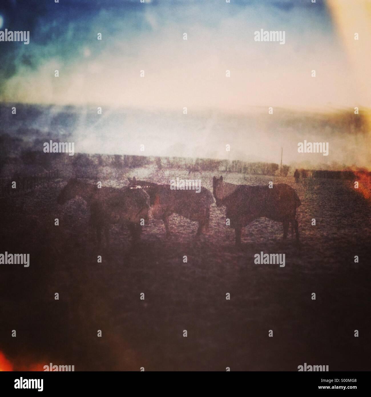 Caballos vestían chaquetas de invierno en campo con filtros vintage Imagen De Stock