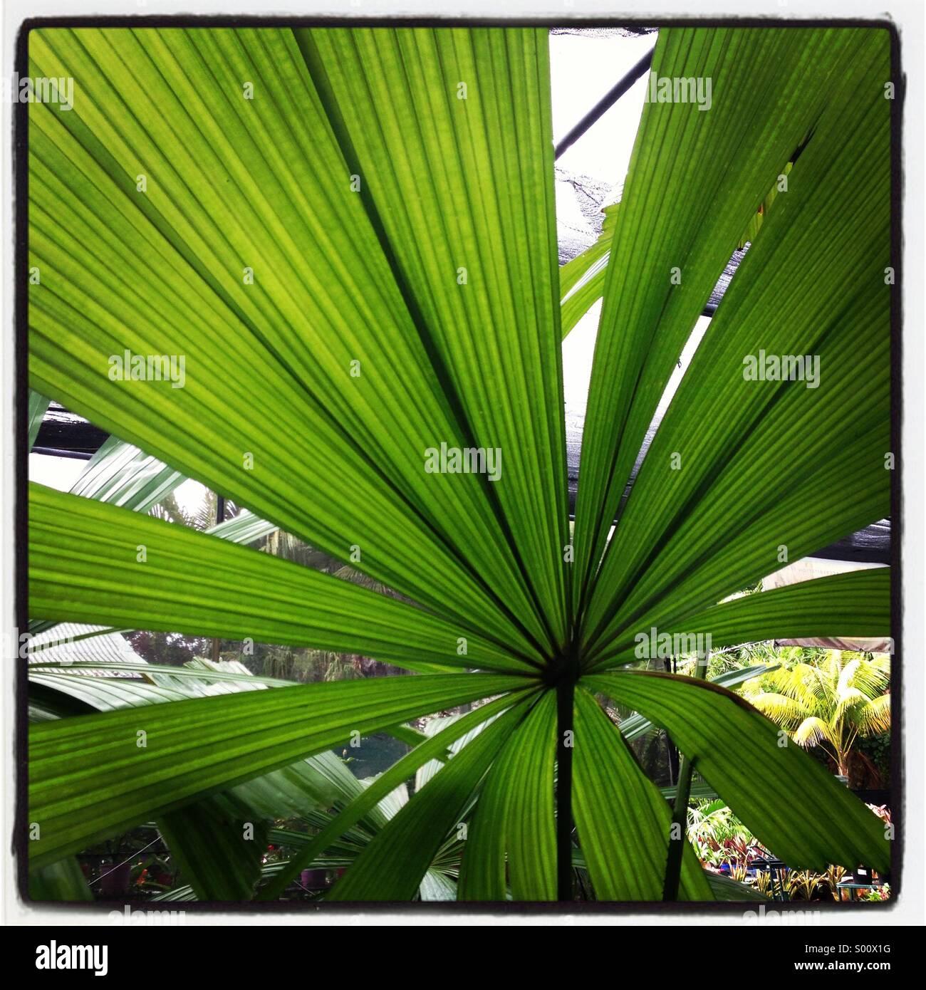 Palmitos Imagen De Stock