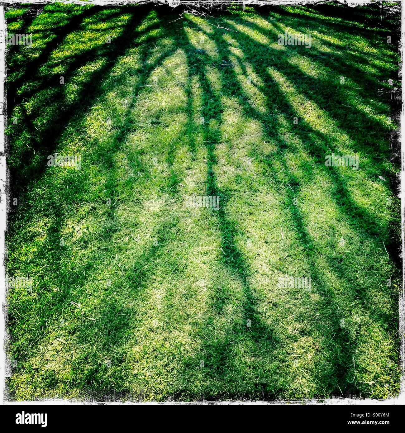 Resumen de las ramas de árbol de sombra sobre el césped. Hipstamatic, iPhone. Imagen De Stock