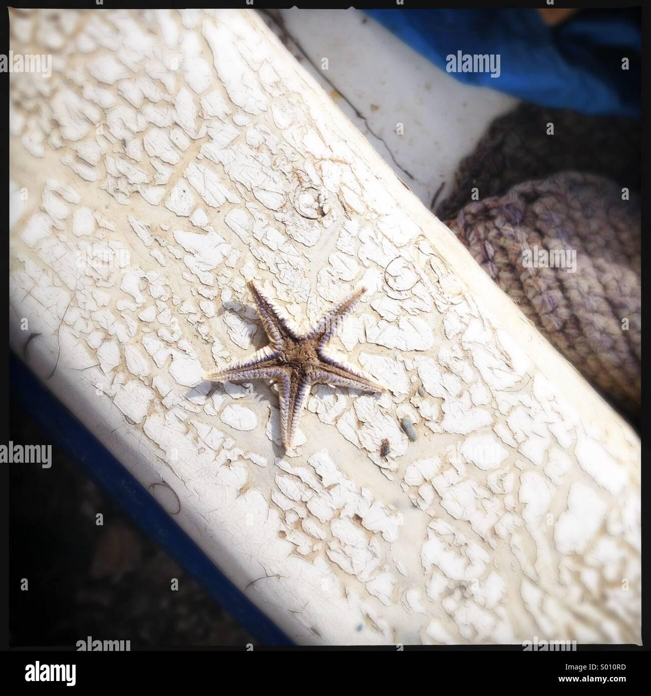 Pequeña estrella de mar secos en el borde del barco en Sampiere agrietado, Sicilia. Imagen De Stock