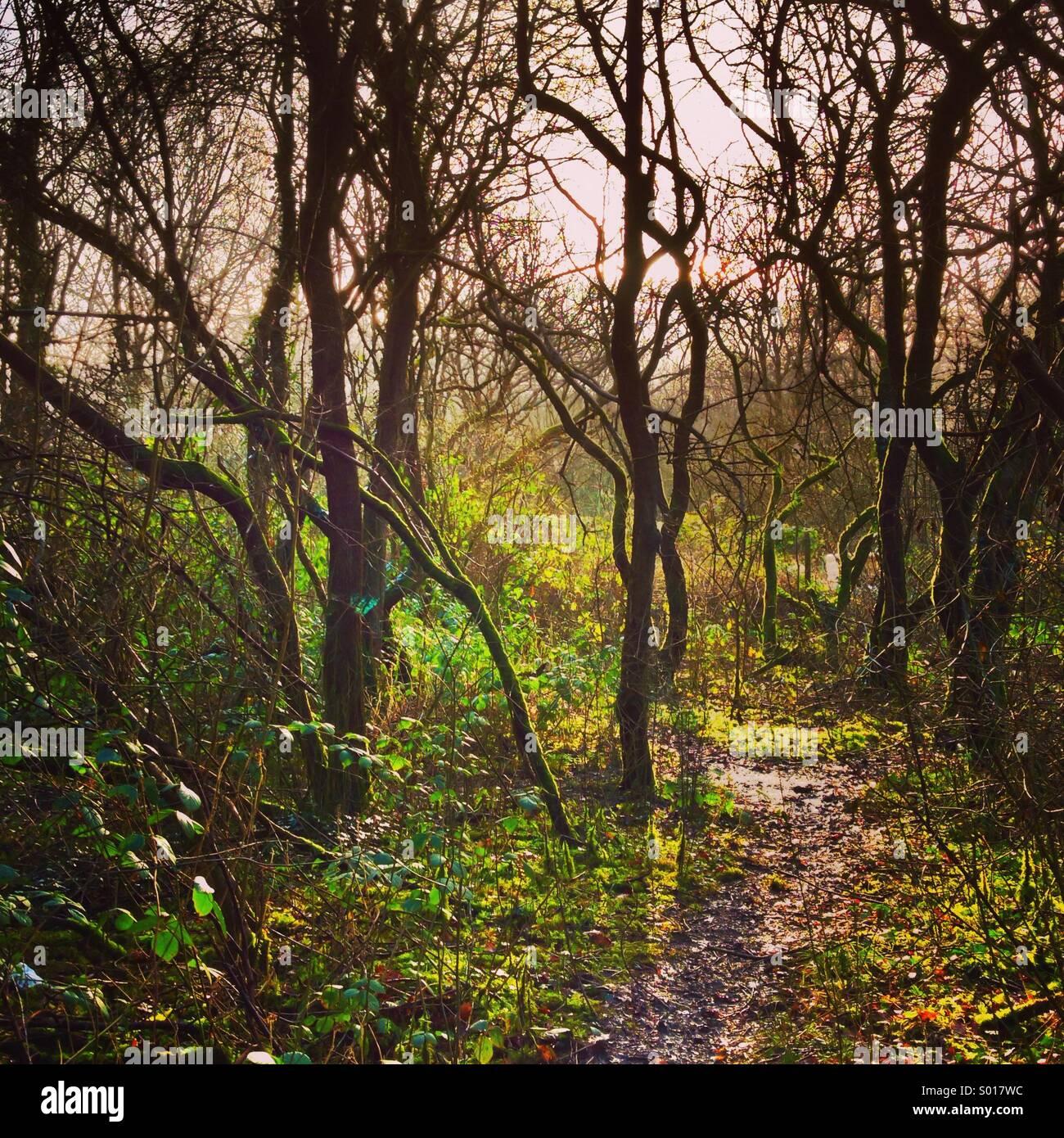 Vista a través de los densos bosques del bosque húmedo, con el sol brillando a través de los árboles Foto de stock