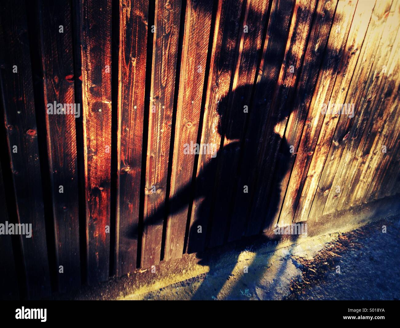 Sombra del hijo de 3 años en la pared de madera. Imagen De Stock