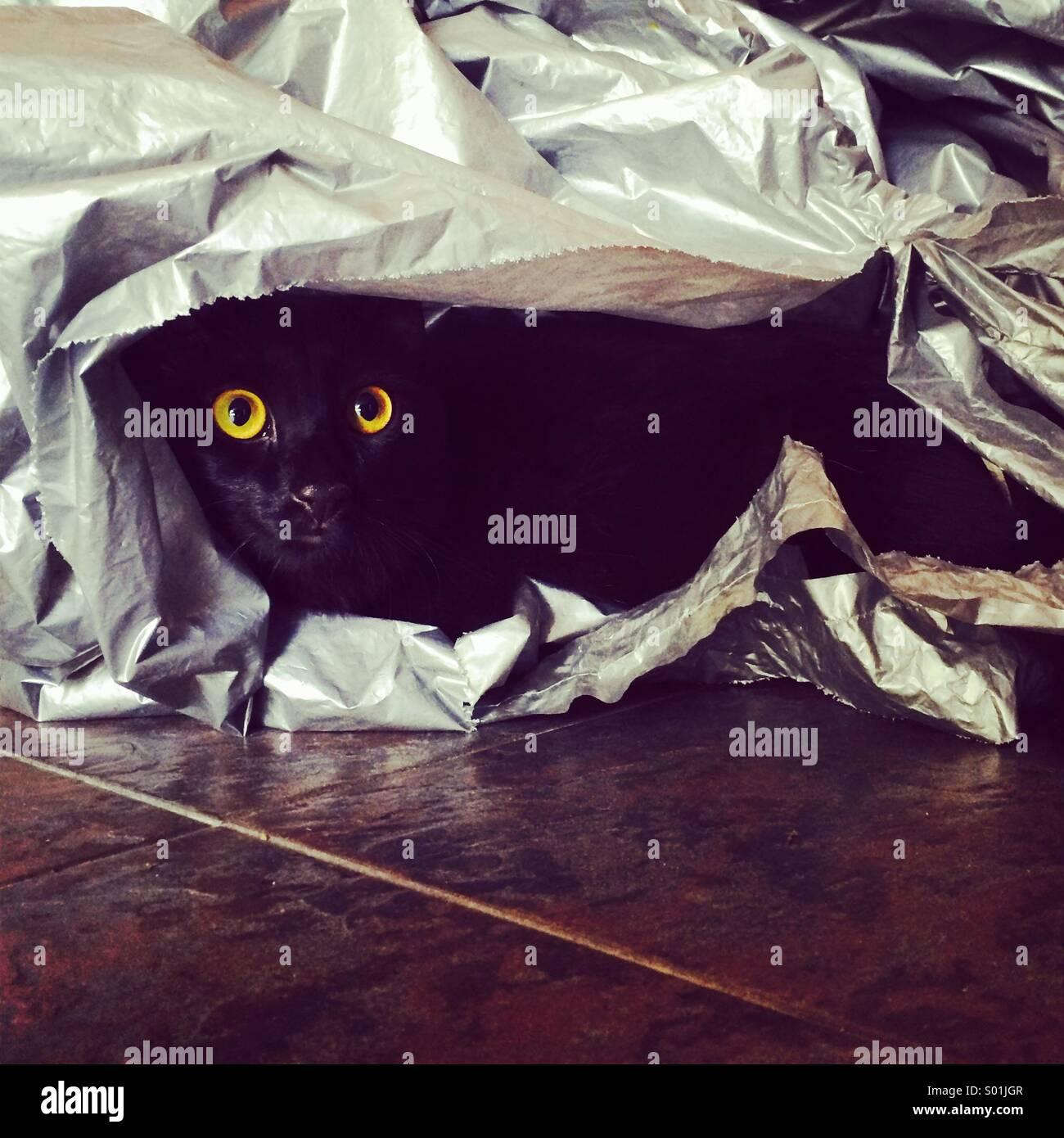Un gato negro bajo envolturas de plástico Foto de stock