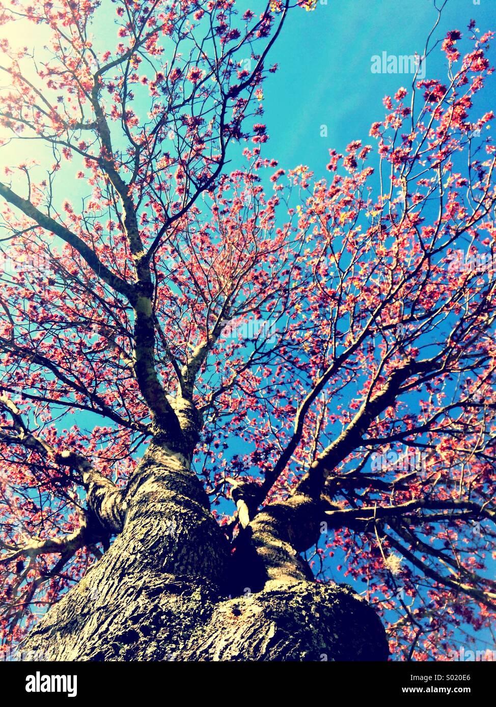 Árbol de primavera Imagen De Stock