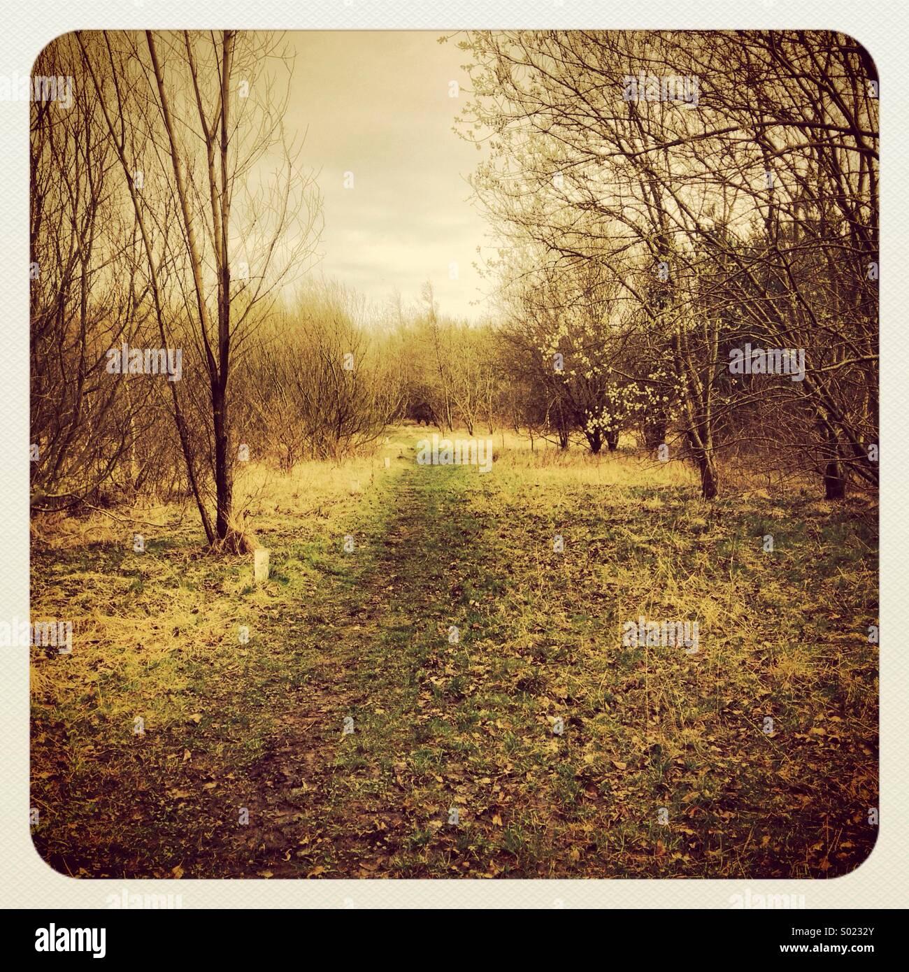 Woodland caminar cerca de Morpeth, Northumberland redrow Imagen De Stock