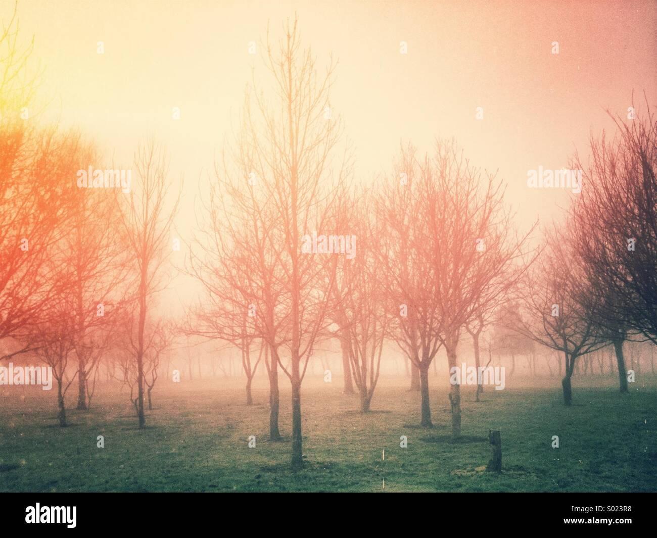Niebla paisaje con un estilo retro filtro aplicado. Foto de stock