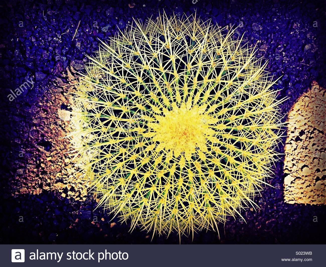 Cactus Love Imagen De Stock