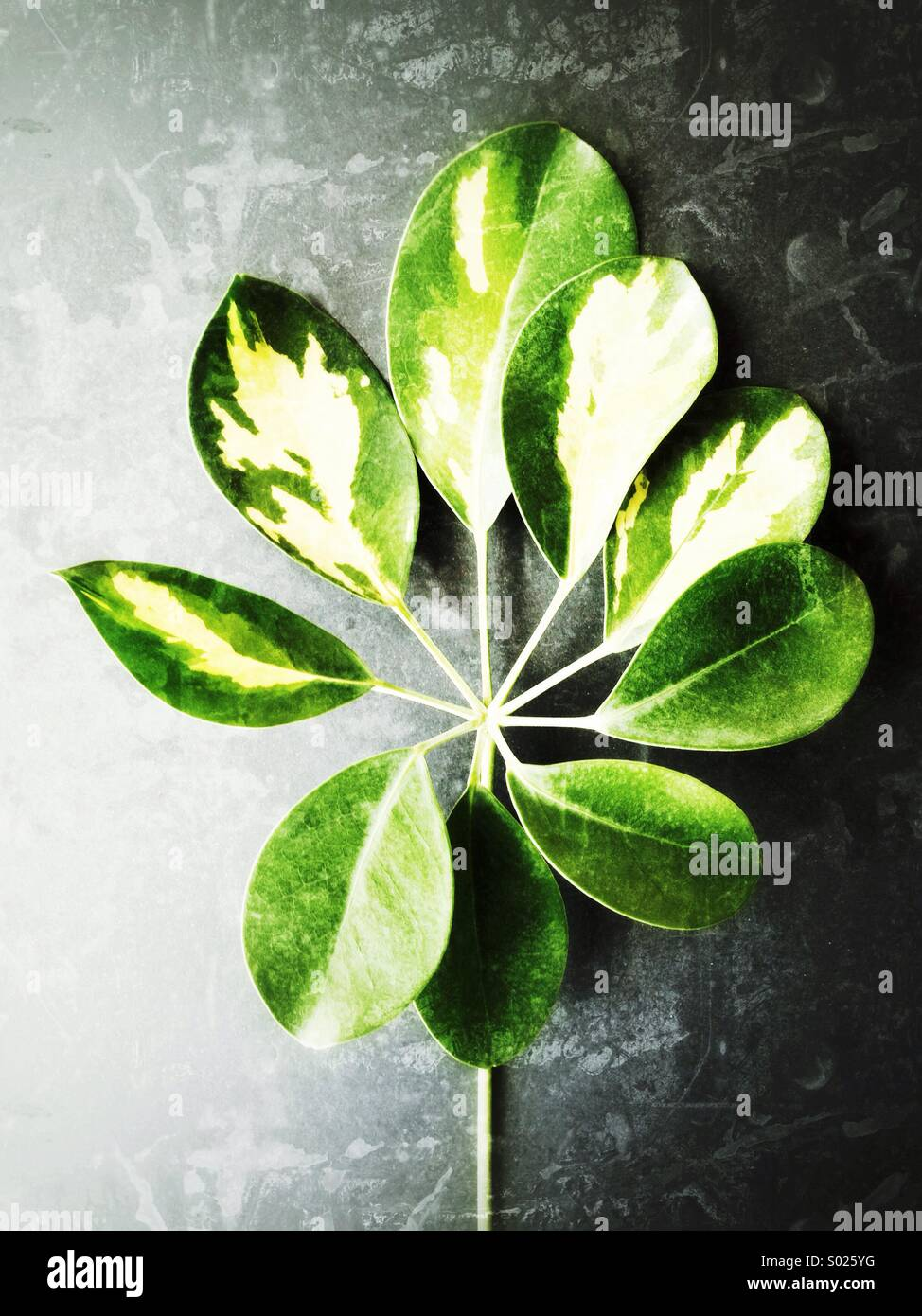 Hojas de color verde Imagen De Stock