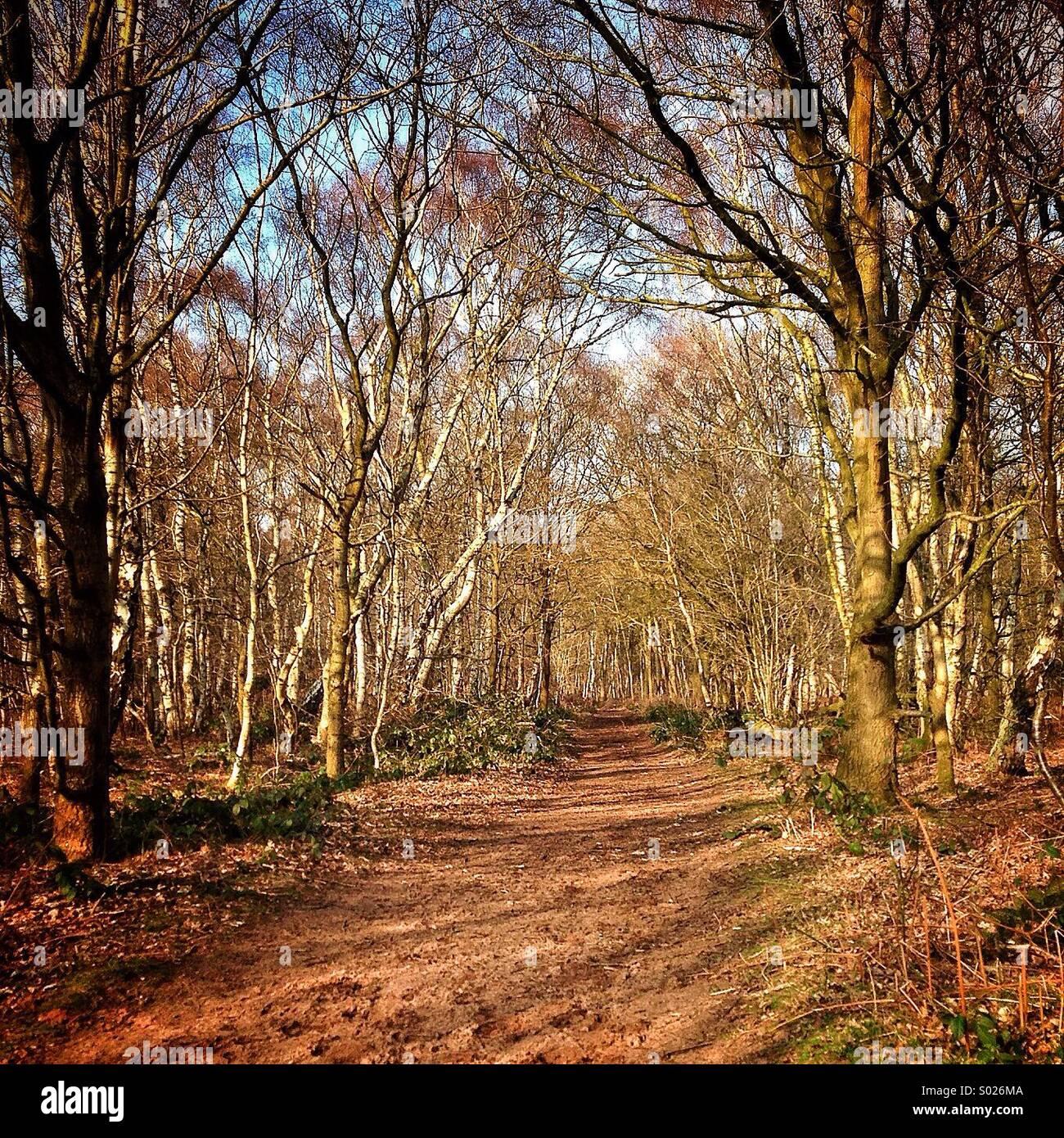 Un paseo por el bosque... Imagen De Stock