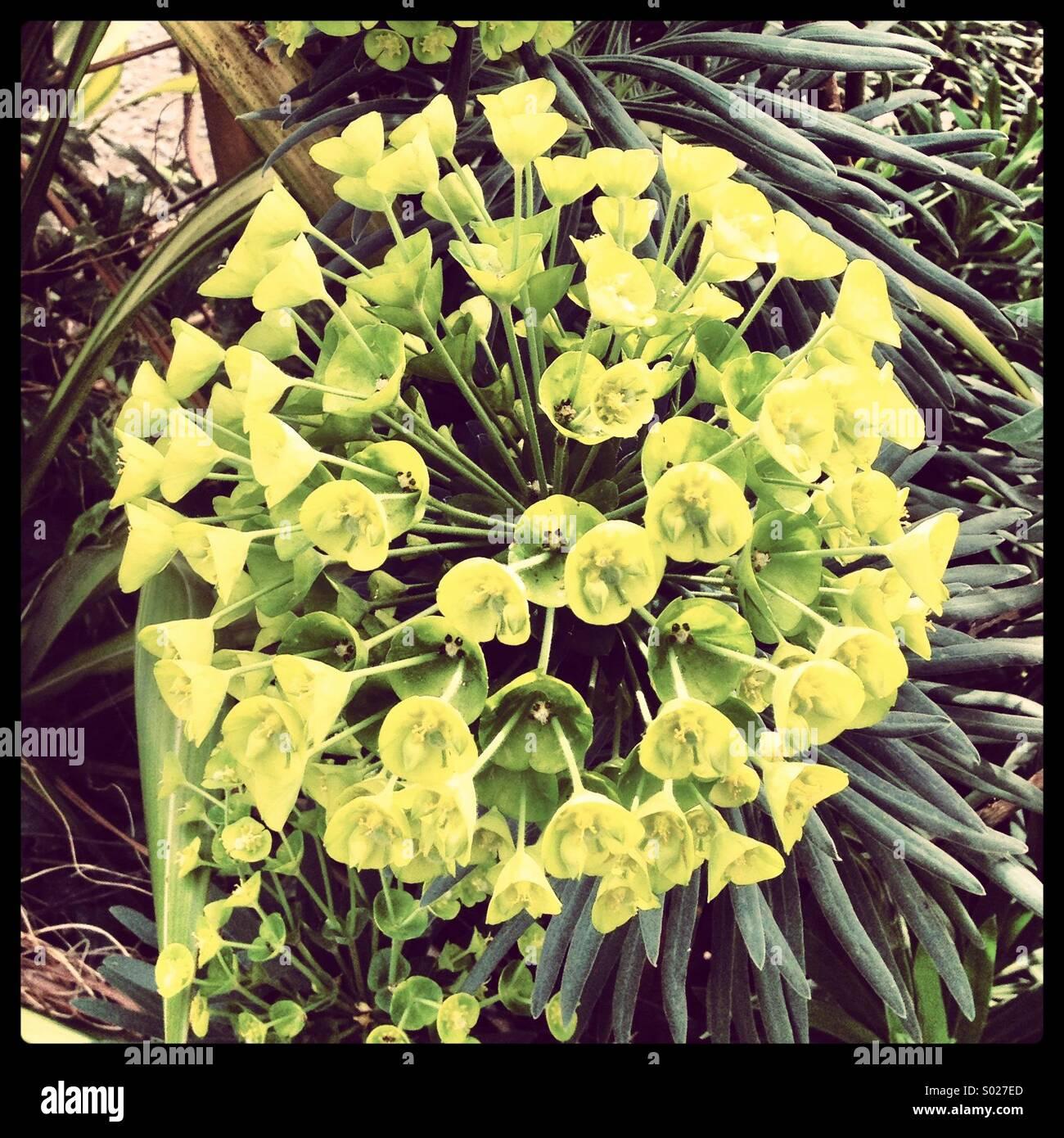 Interesante y planta inusual Imagen De Stock