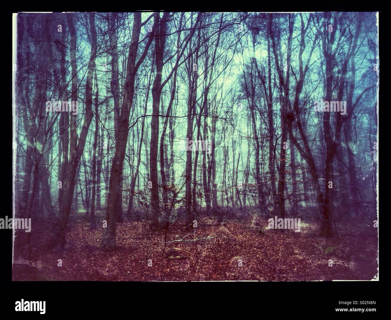 La atmósfera antigua British Woodland Imagen De Stock