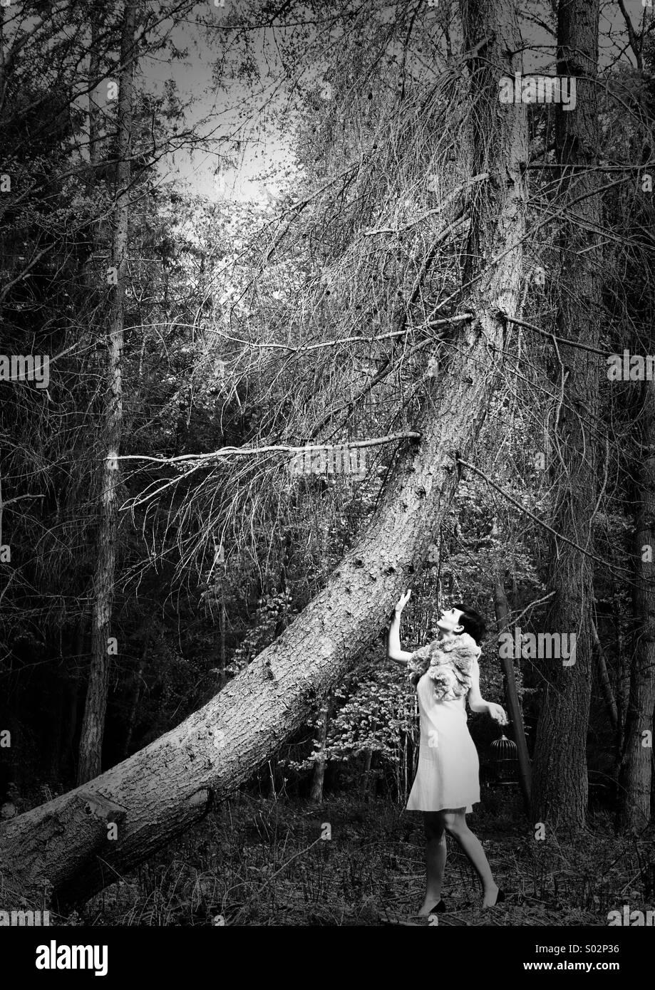 Un paseo por el bosque II Imagen De Stock