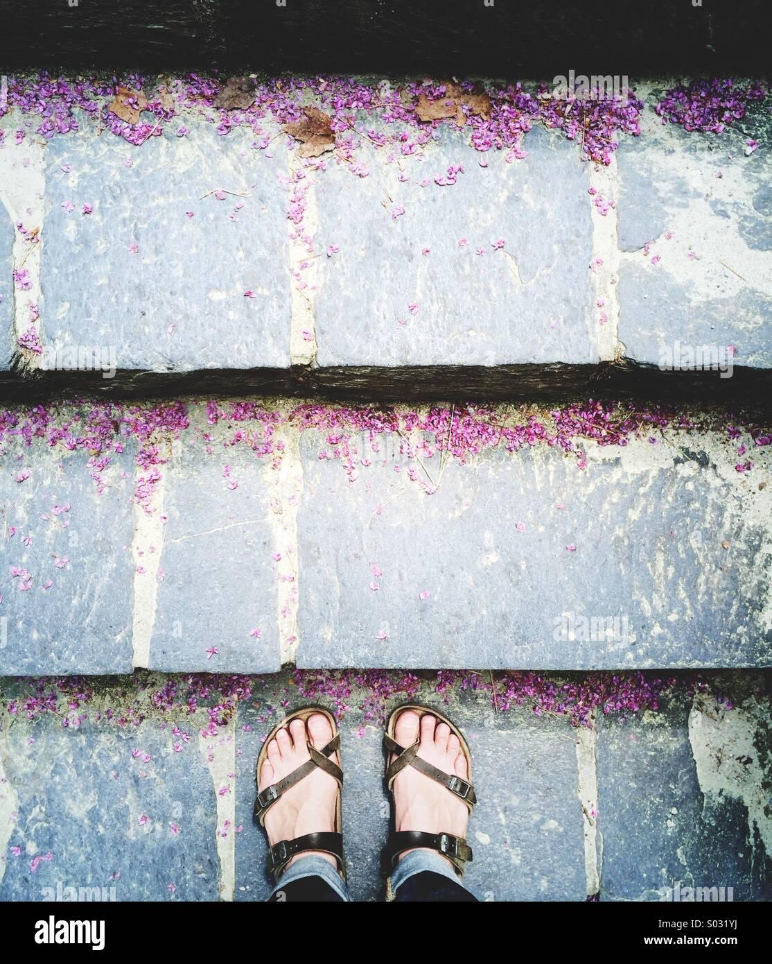 Pies en sandalias en pizarra ciclamor pasos con pétalos. Imagen De Stock
