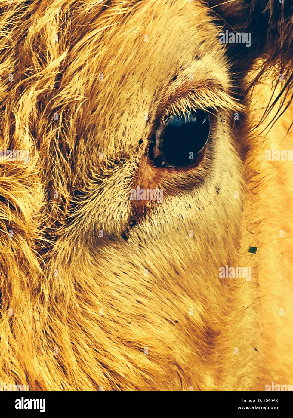 Ojo n I Foto de stock