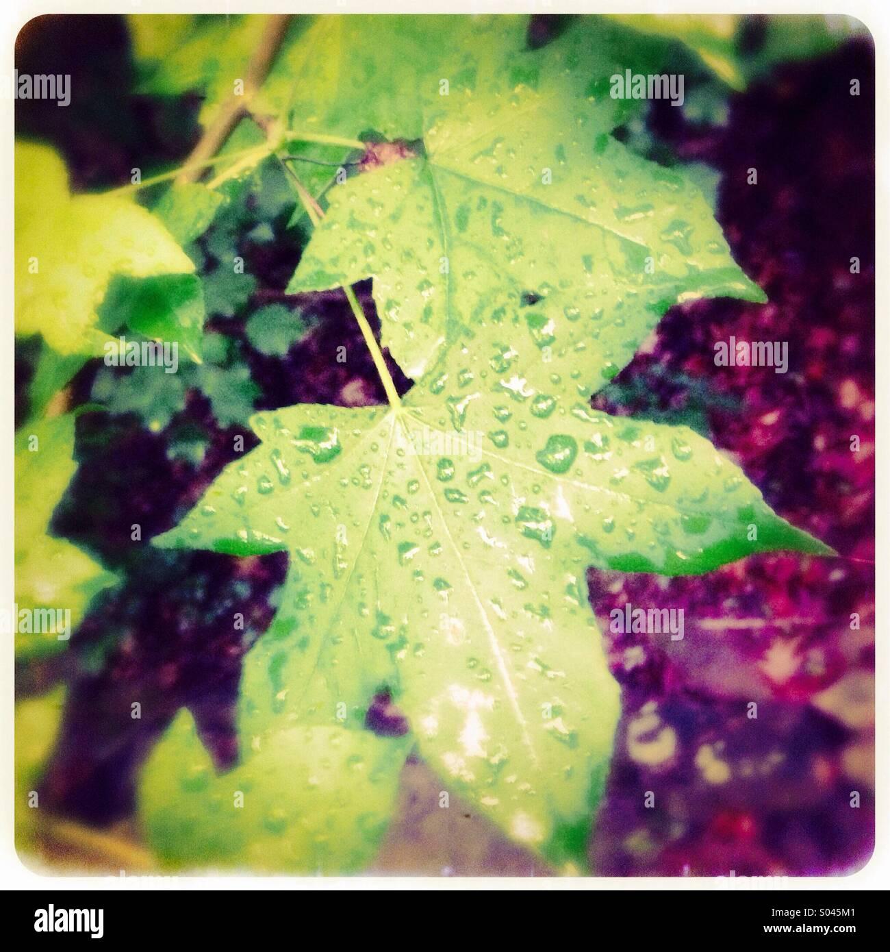 Cierre de hoja con gotas de lluvia Imagen De Stock