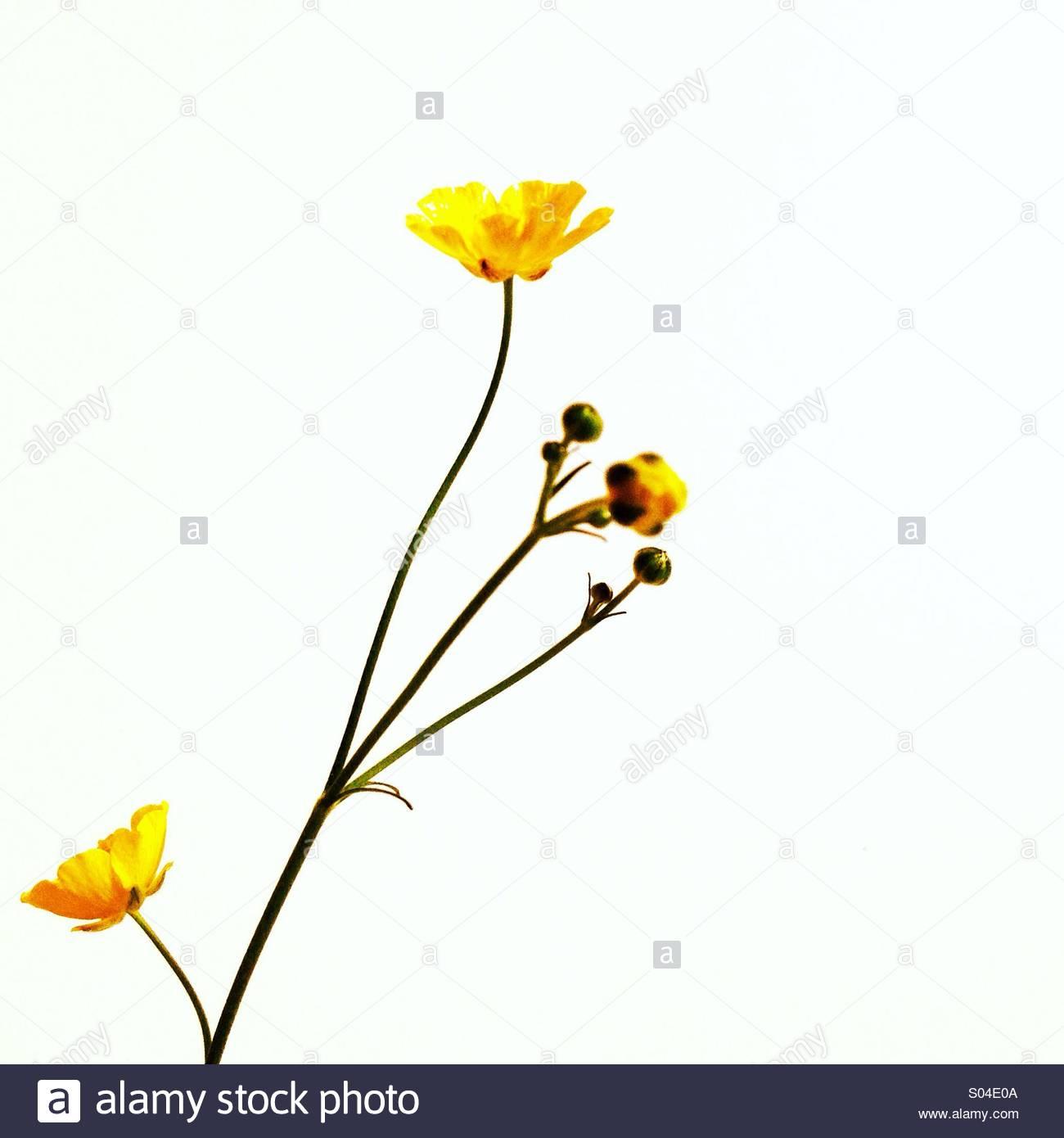 Flor amarilla Imagen De Stock