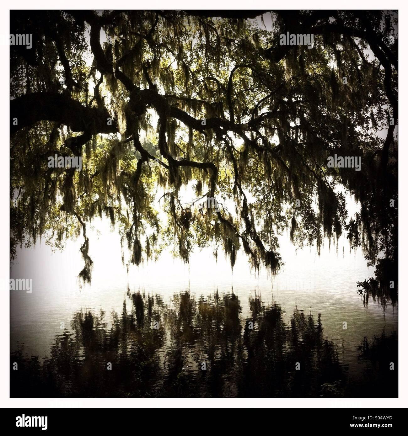 Las ramas de un gran árbol, reflejado en el agua Imagen De Stock