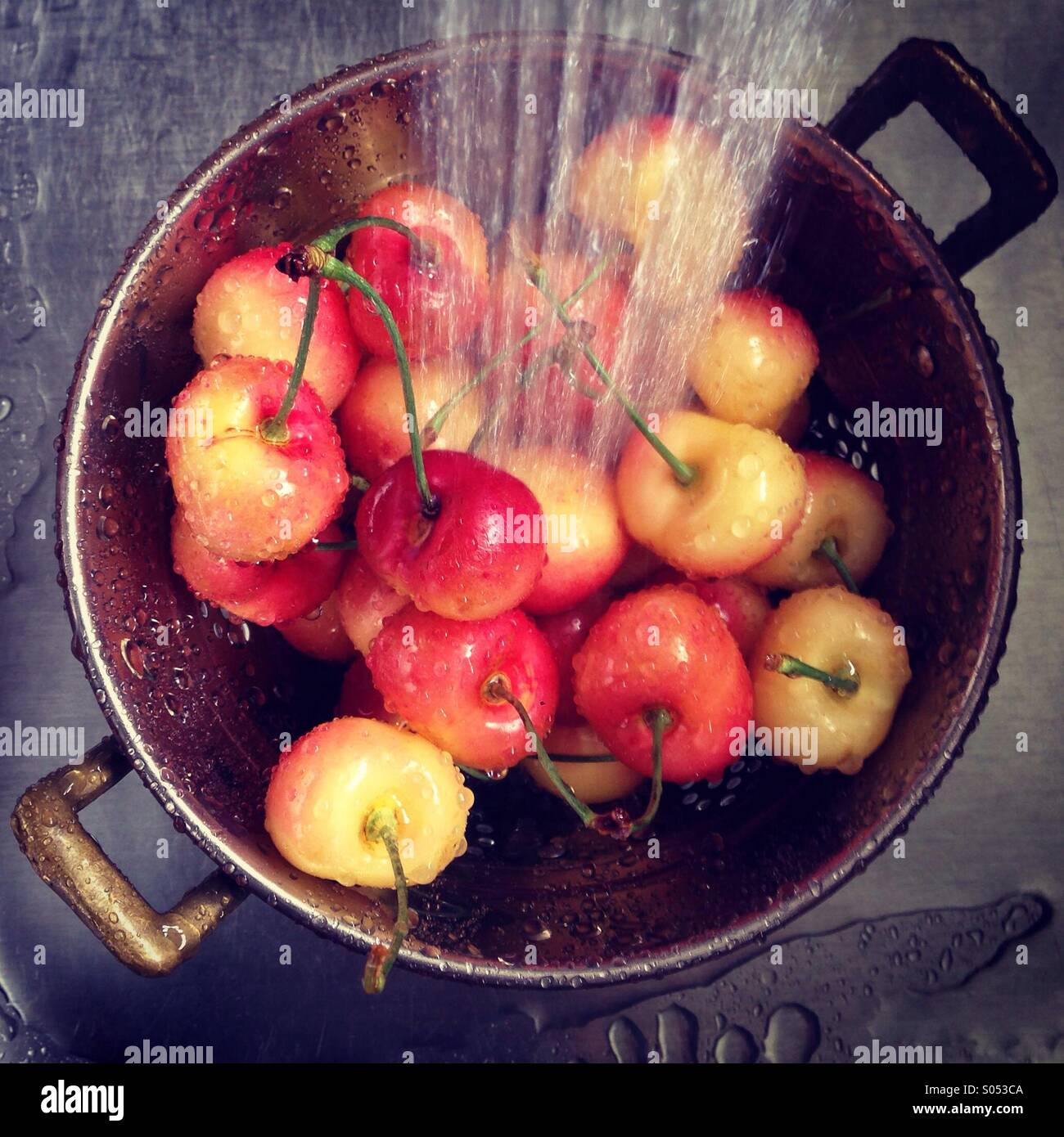 Lavar las cerezas Rainier en el fregadero. Imagen De Stock