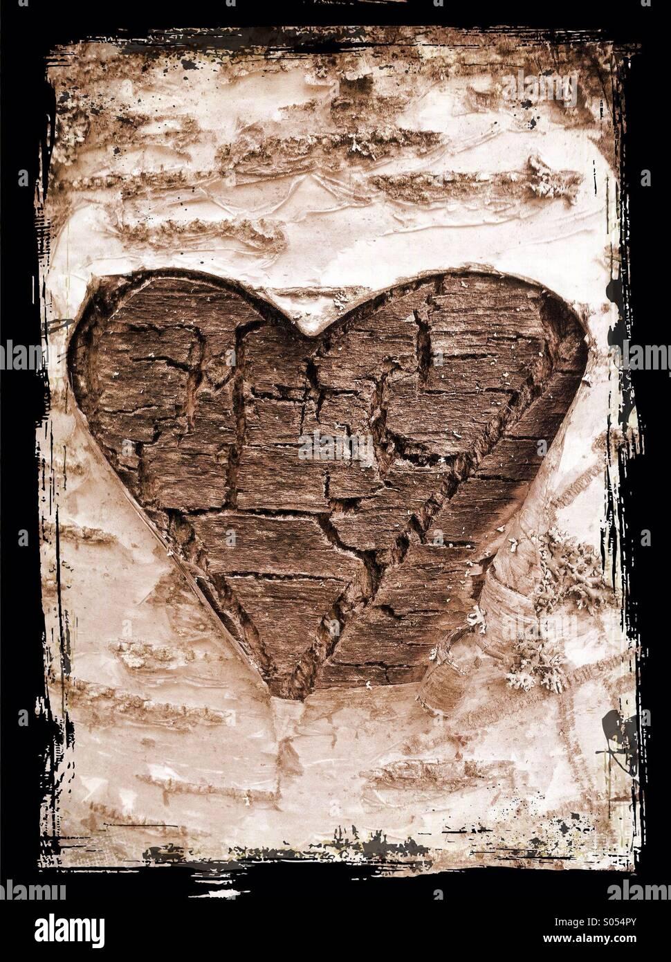Un corazón para cortar un árbol de abedul Imagen De Stock