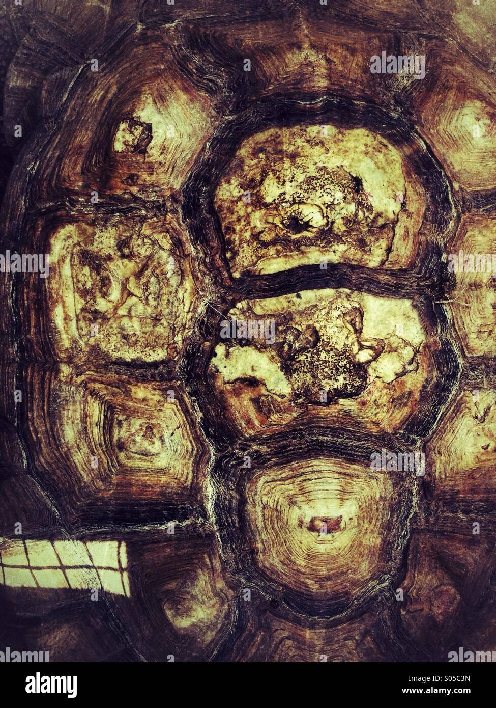 Concha de tortuga Imagen De Stock