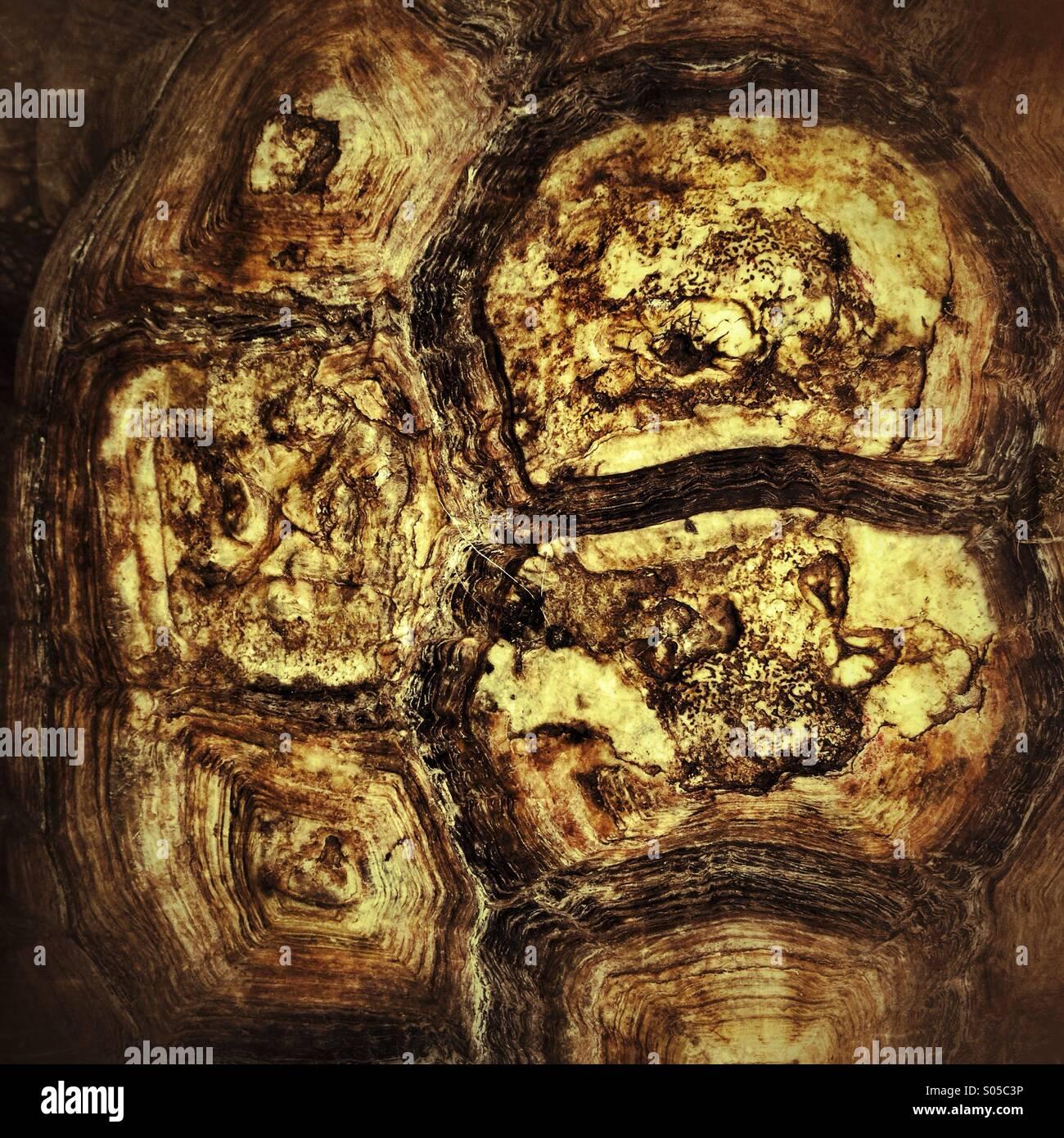Detalle de caparazón de tortuga Imagen De Stock