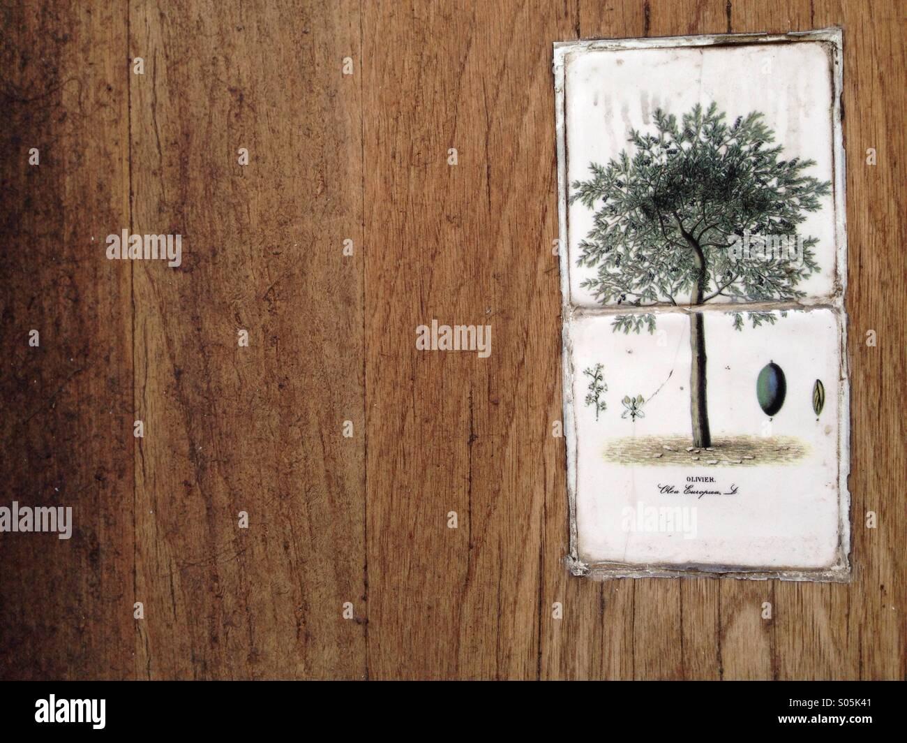 Árbol en la puerta Imagen De Stock