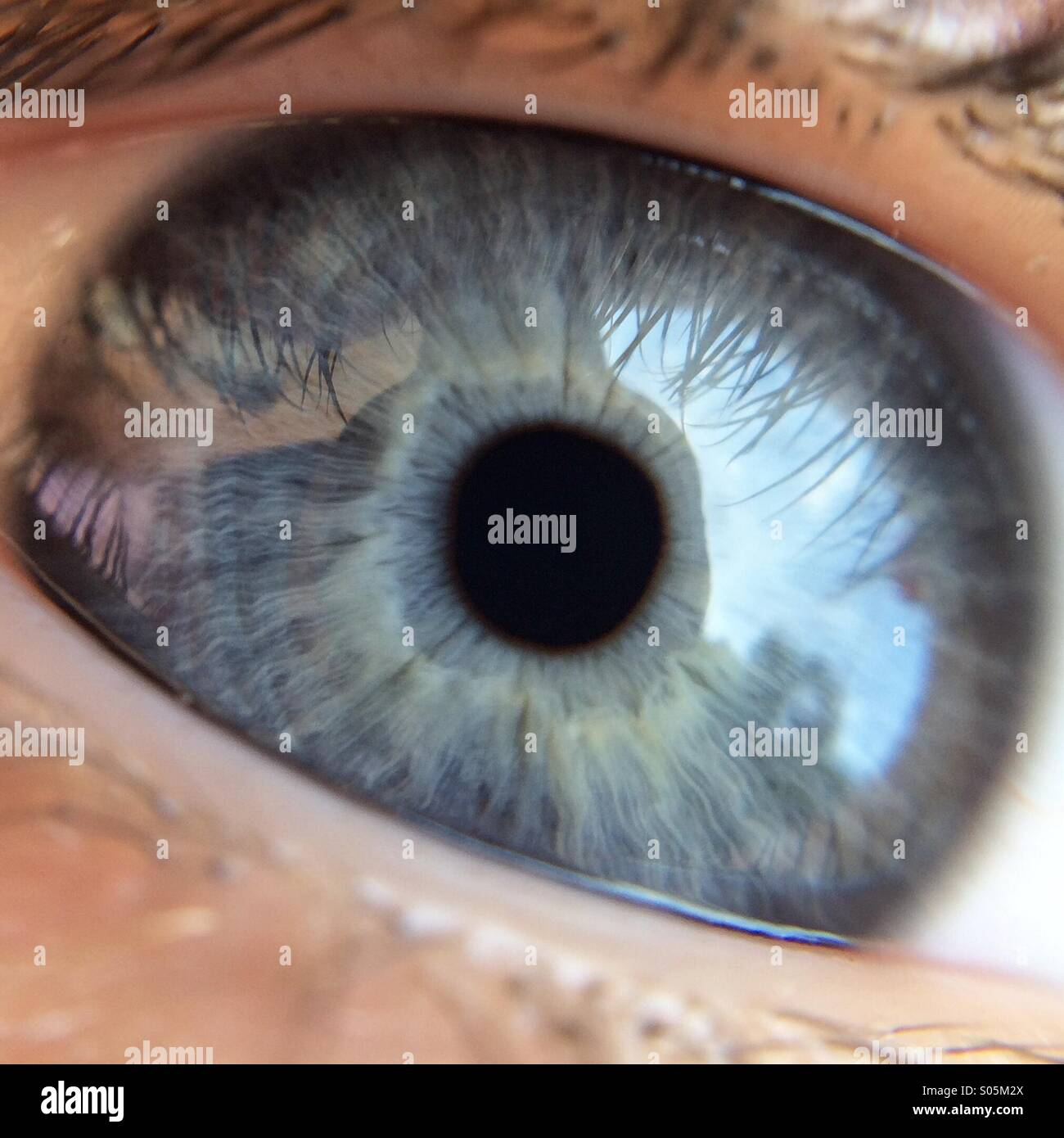 Blue Eye Imagen De Stock