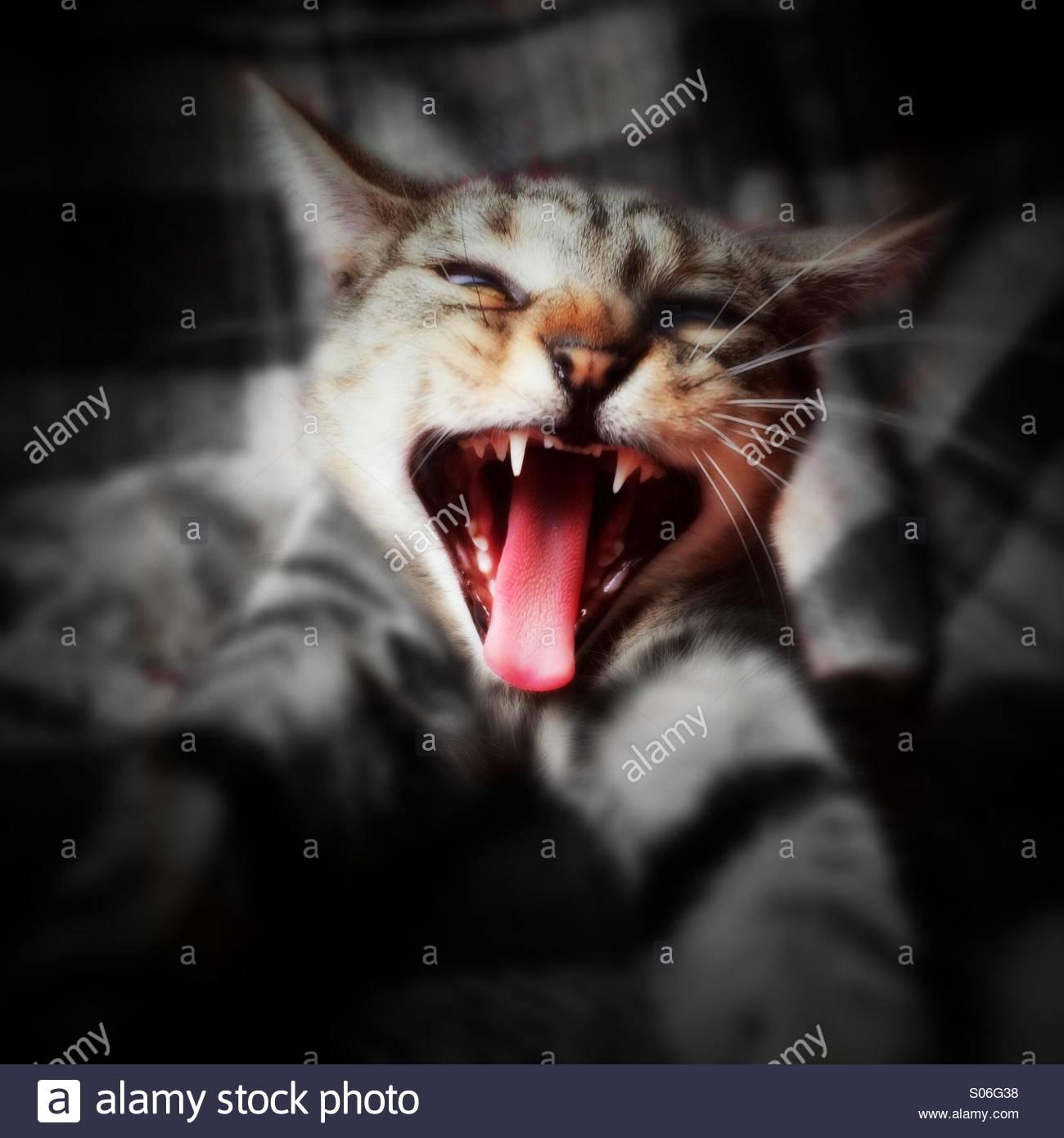 Con actitud de gato Imagen De Stock