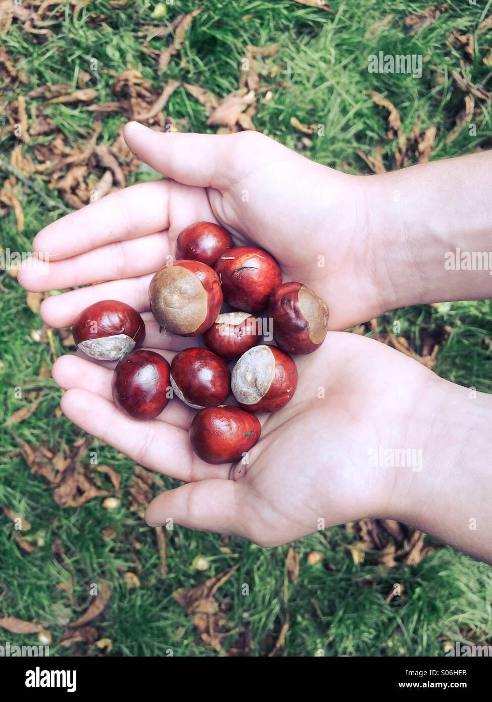 El otoño es aquí Imagen De Stock