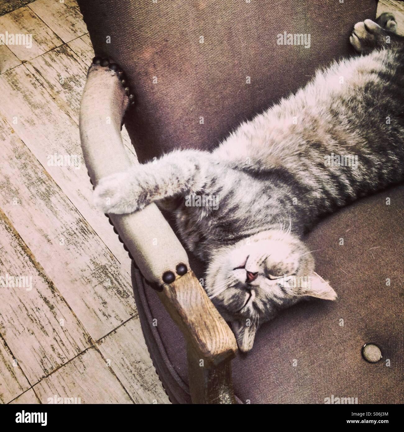 Cat relajándose en una silla. Imagen De Stock