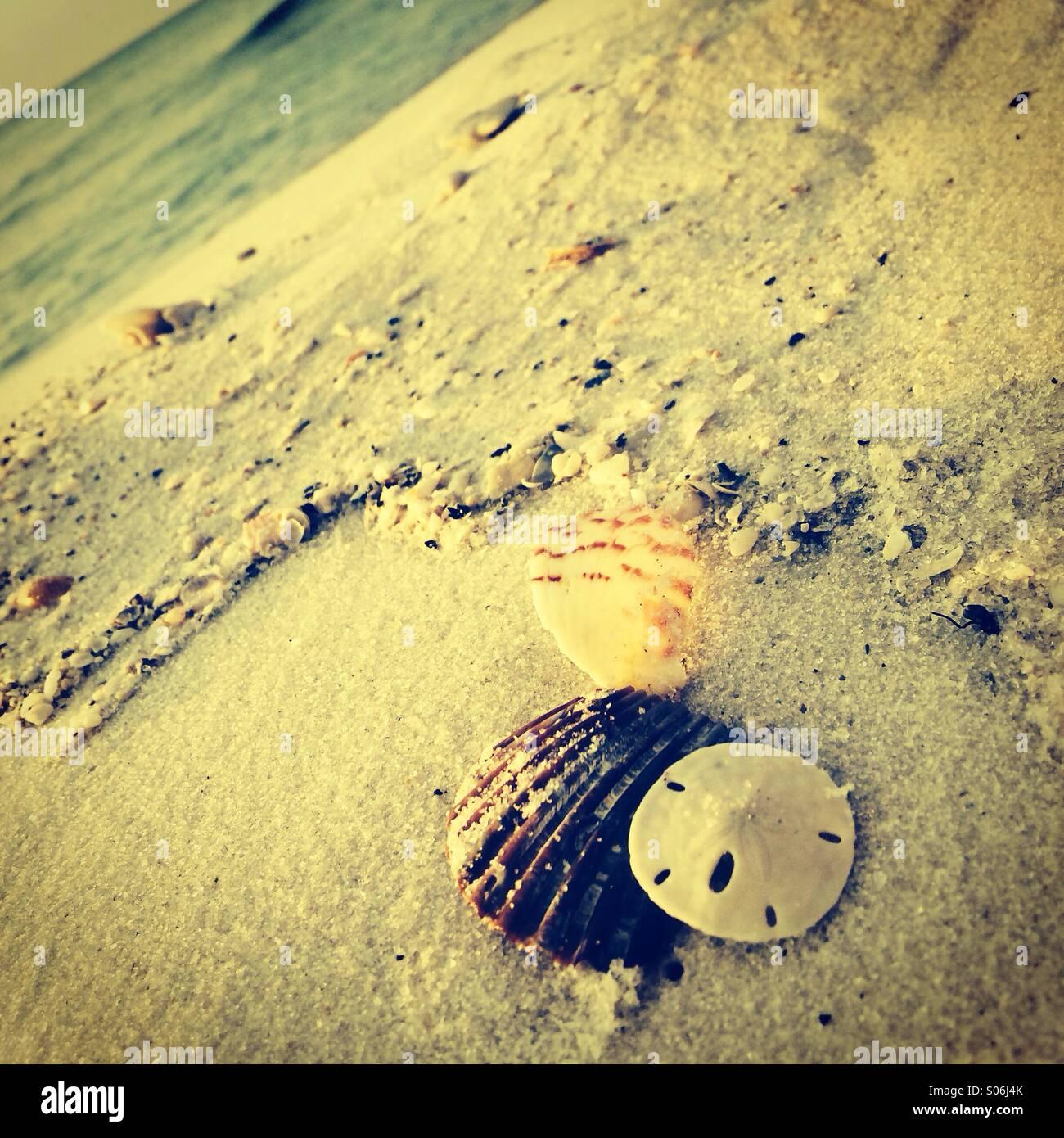 Conchas de la playa Imagen De Stock
